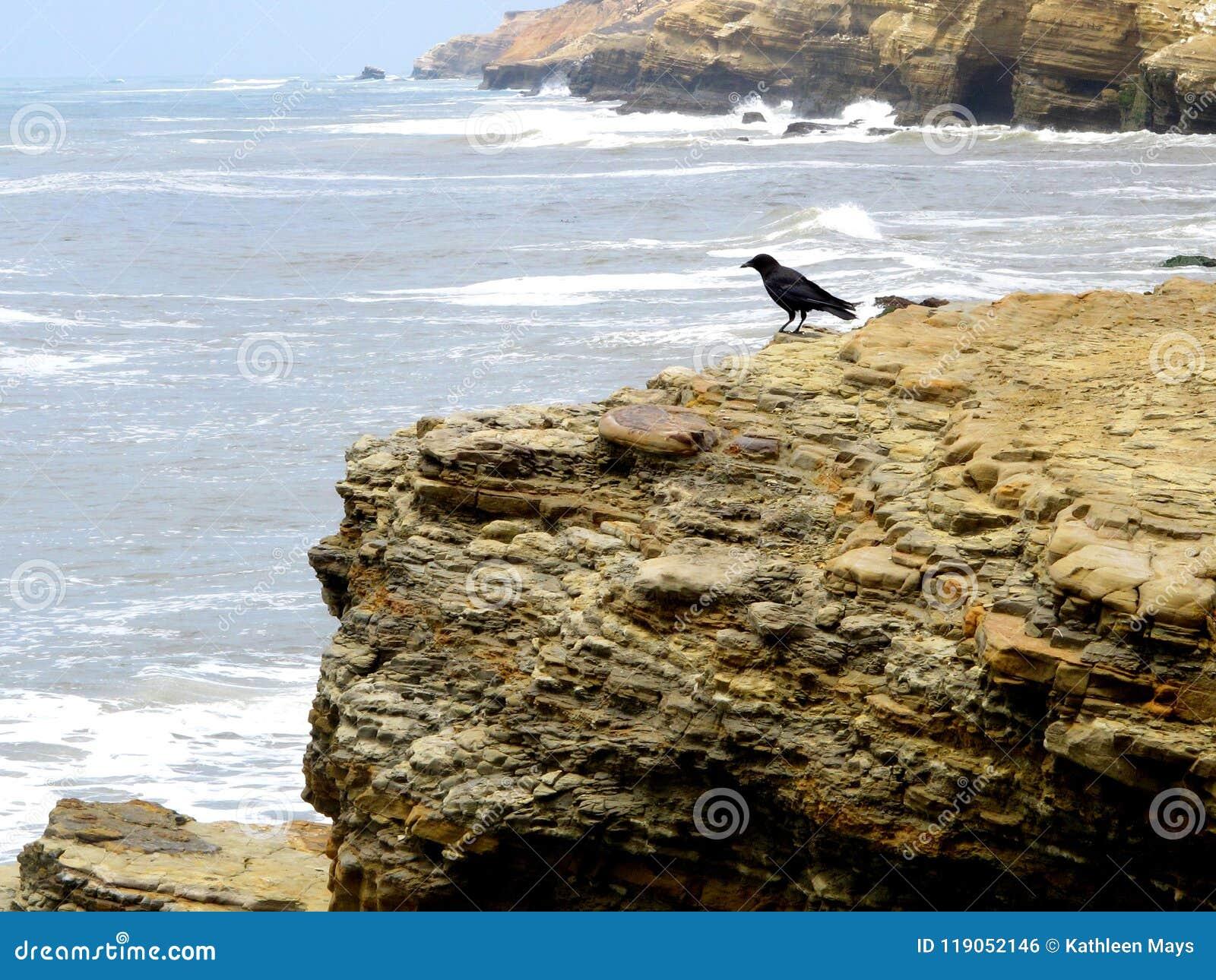 Zwarte Vogel op de Sedimentaire Lagen van een Vreedzame Kustklip