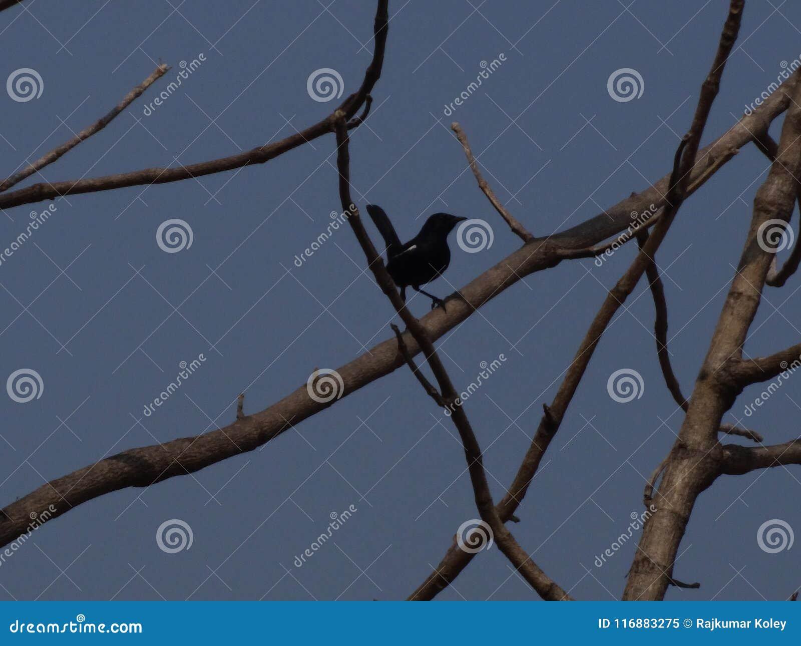 Zwarte vogelzitting op het takje van de boomtak