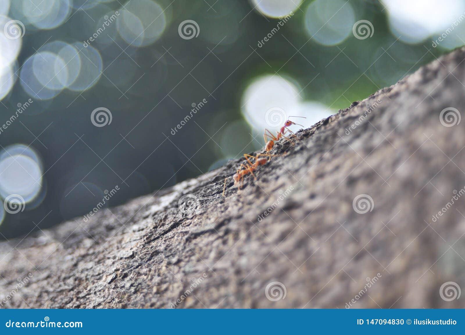 Zwei Ameisen in der Niederlassung die Fokus auf Ameisen