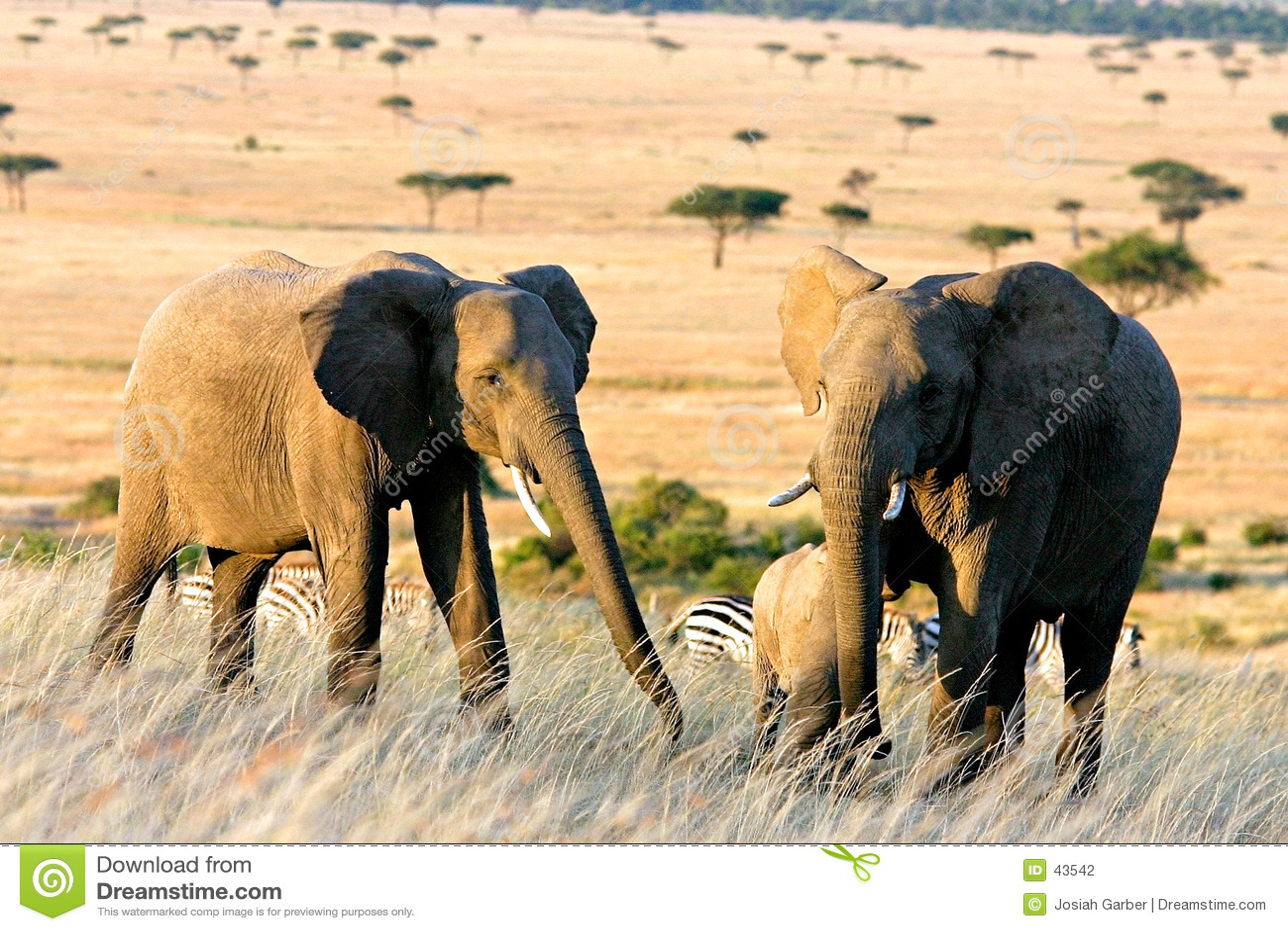 Zwei Elefanten in Afrika