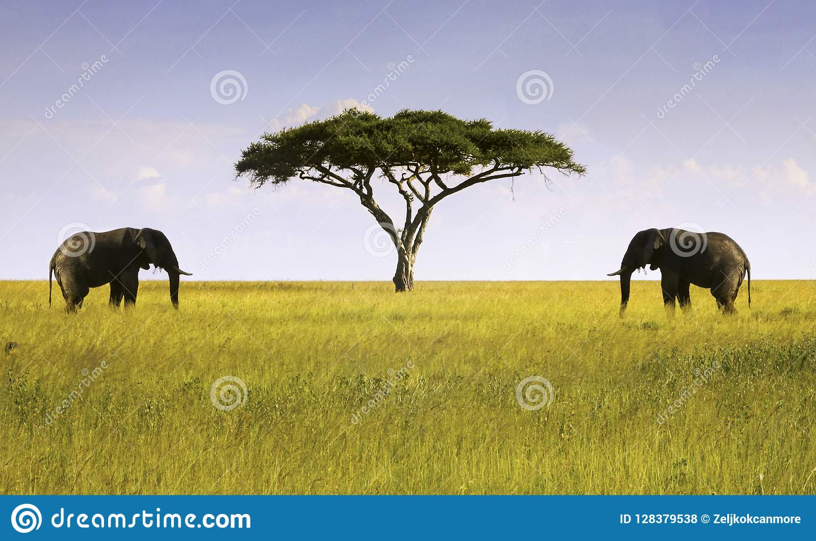 Zwei Elefanten lokalisierten Akazien-Baum-Afrikaner Savannah Serengeti Tanzania