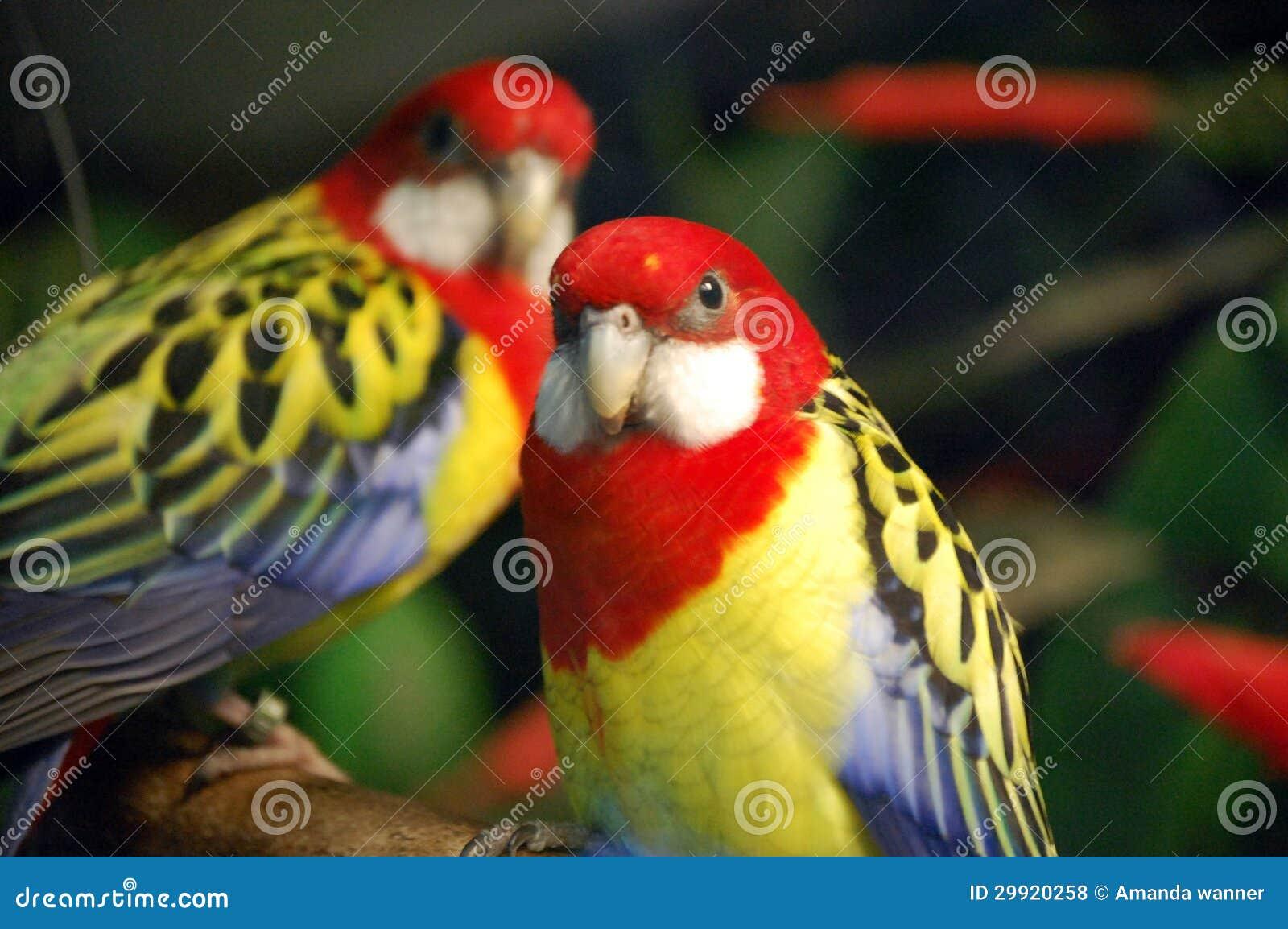 Exotische Vögel