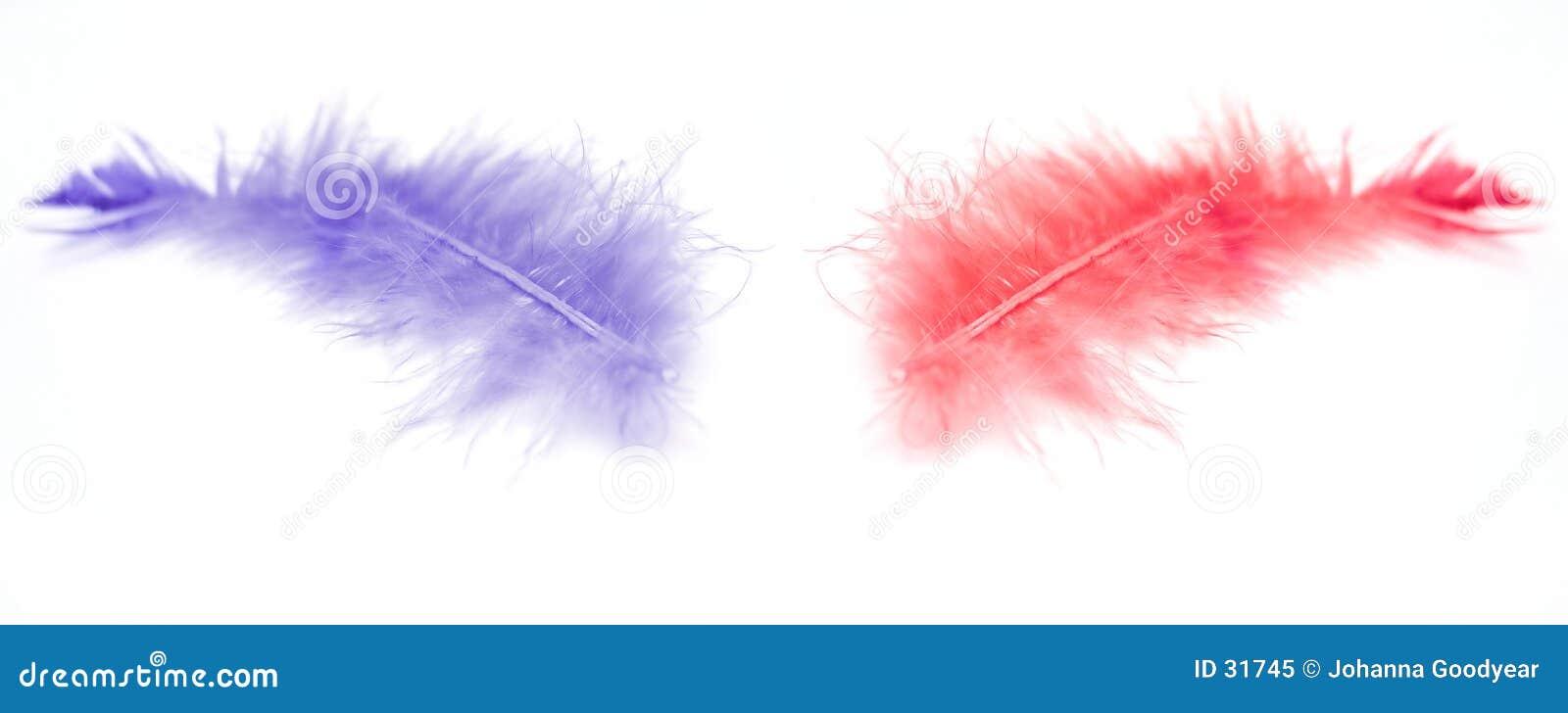 Zwei Federn