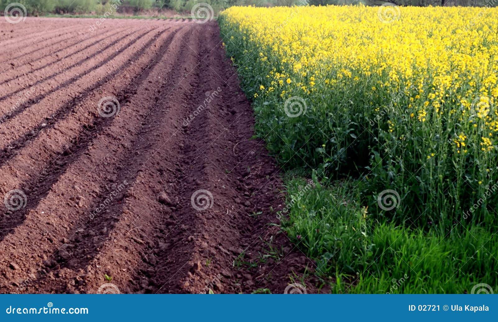 Zwei Felder