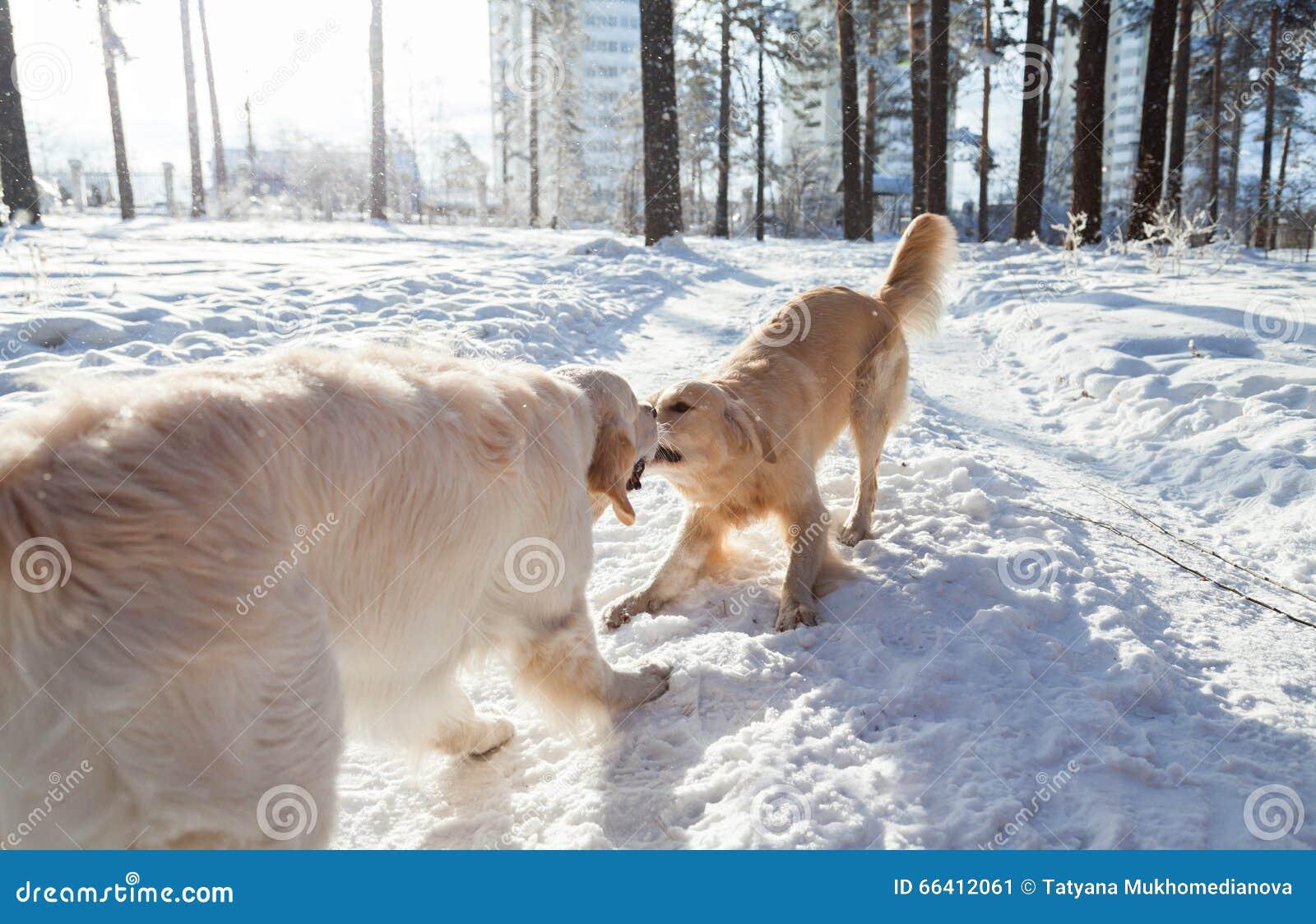 Gartenmobel Bank Metall :  im Schnee im Park spielt Kleidung für Hunde Hund im Winter in der