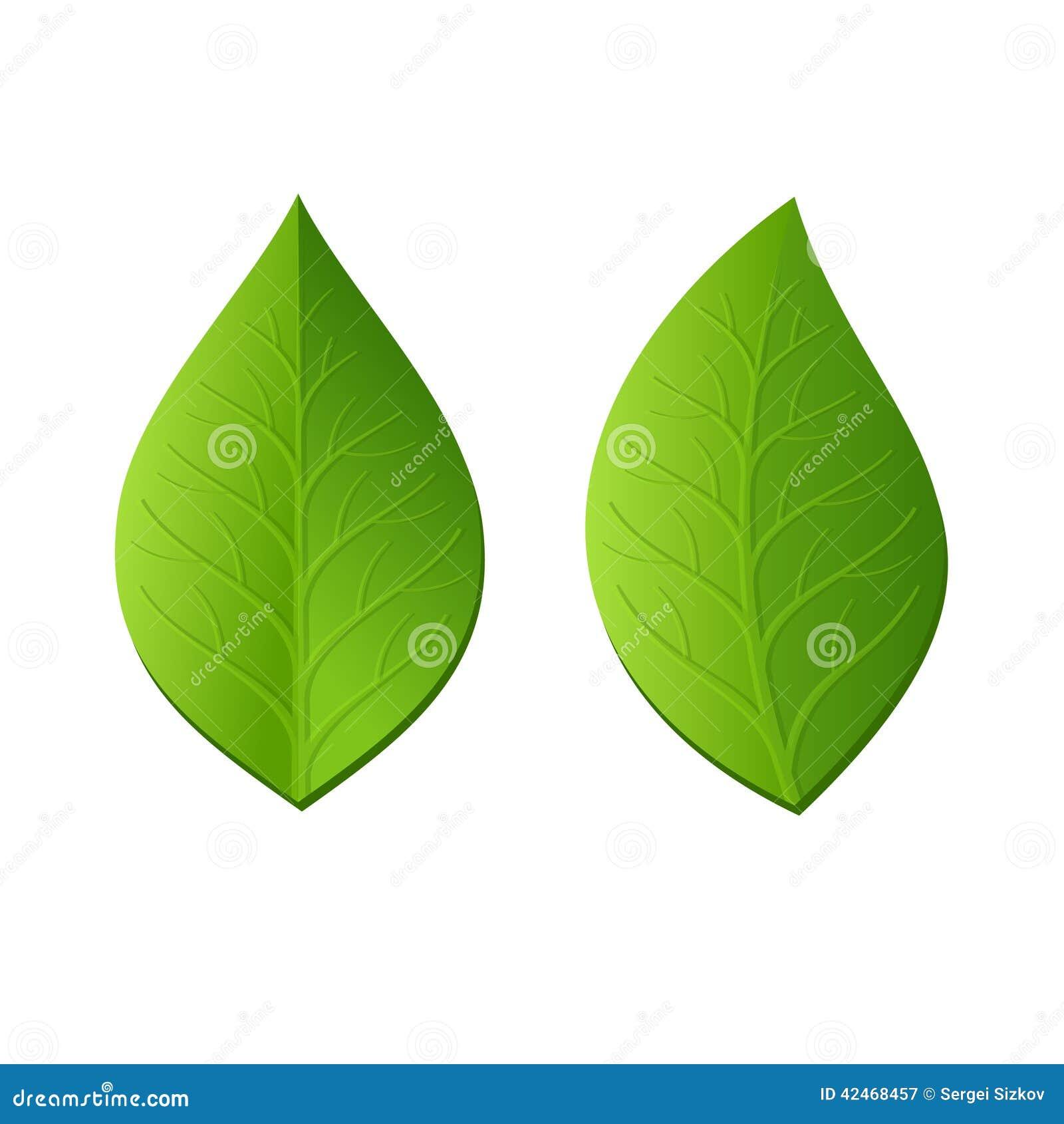 Zwei grüne Blätter auf weißem Hintergrund Vektor