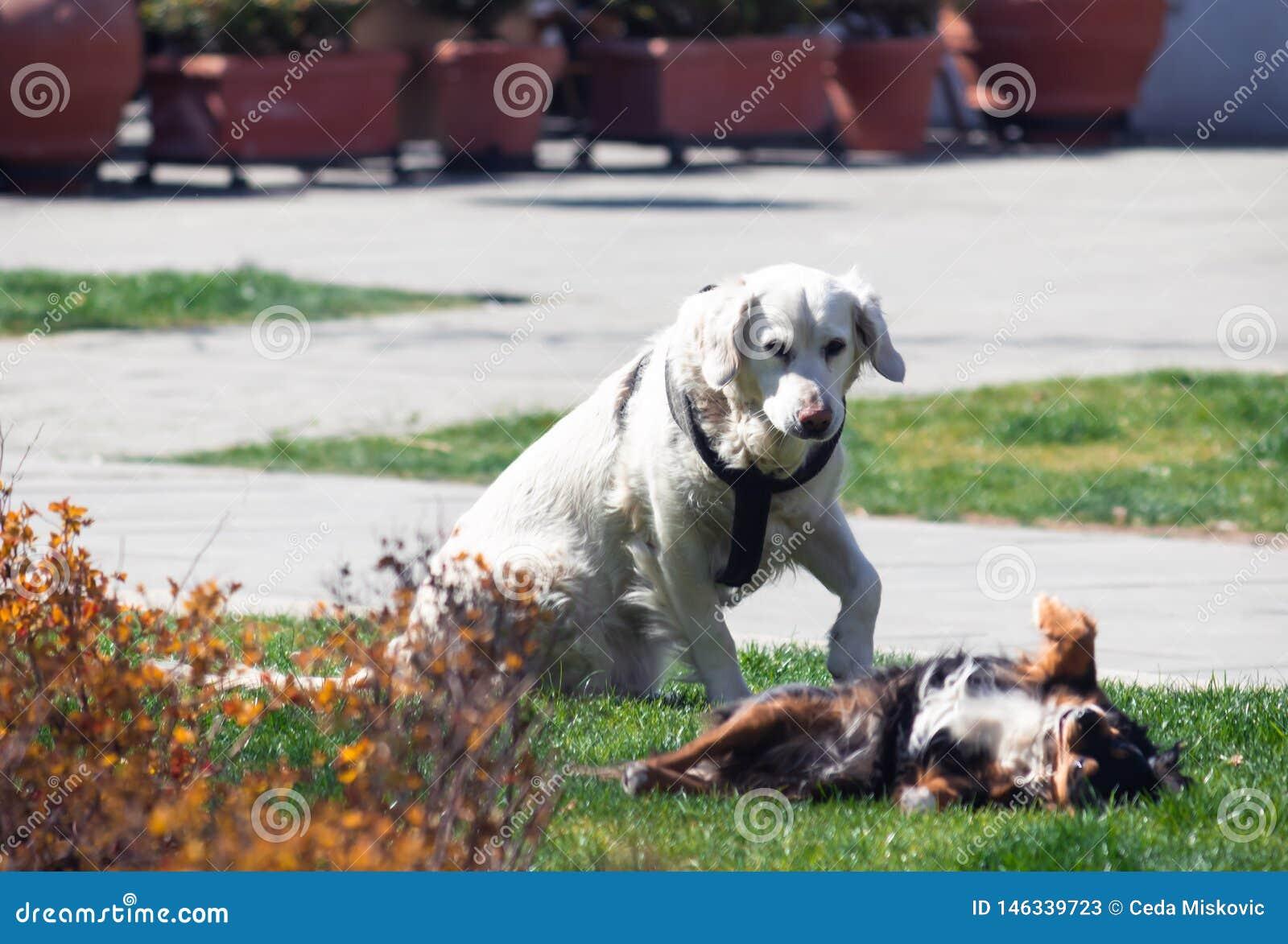 Zwei Hunde, bemannt die besten Freunde und genießt jedes andere Firma