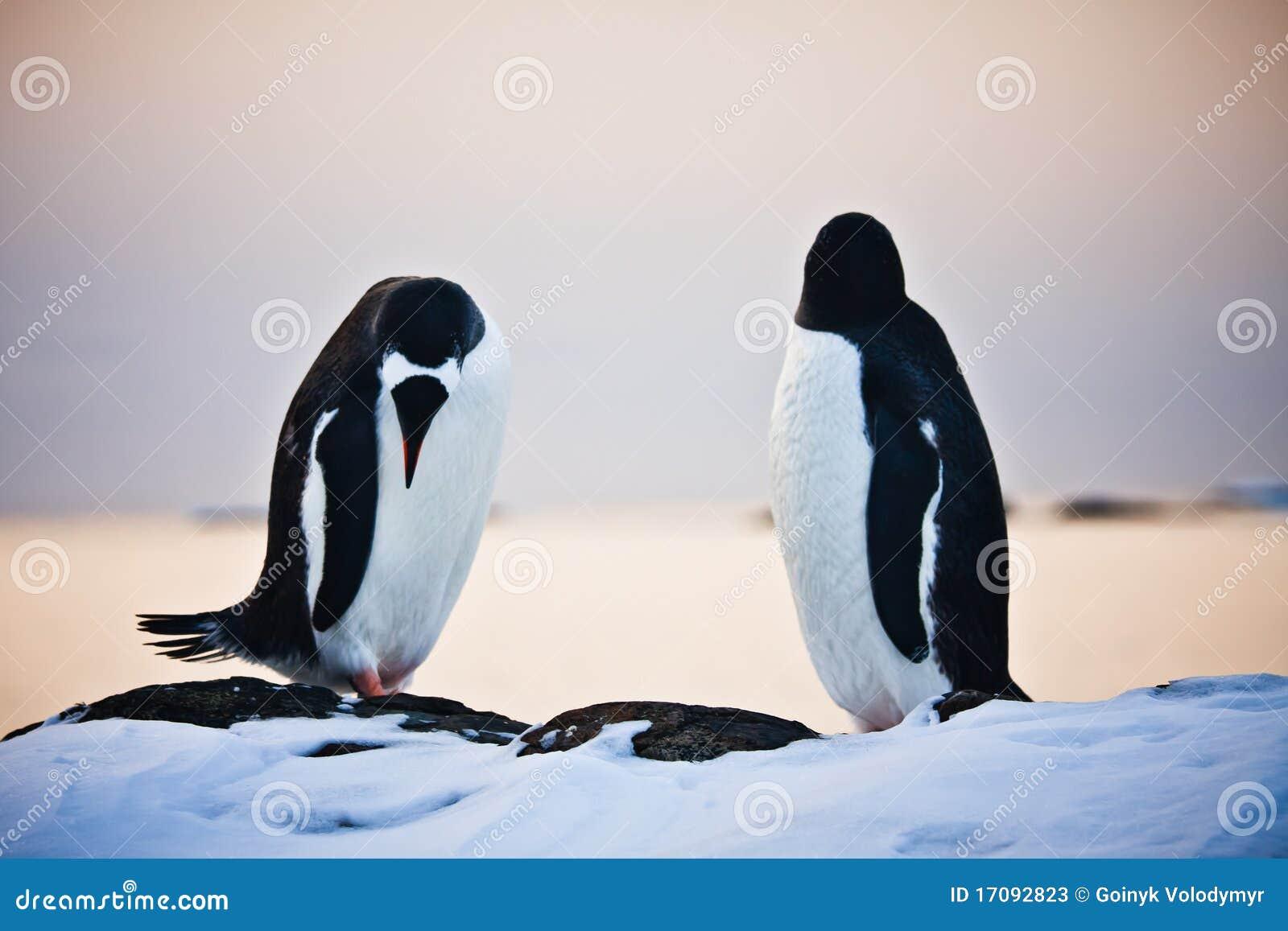Zwei identische Pinguine