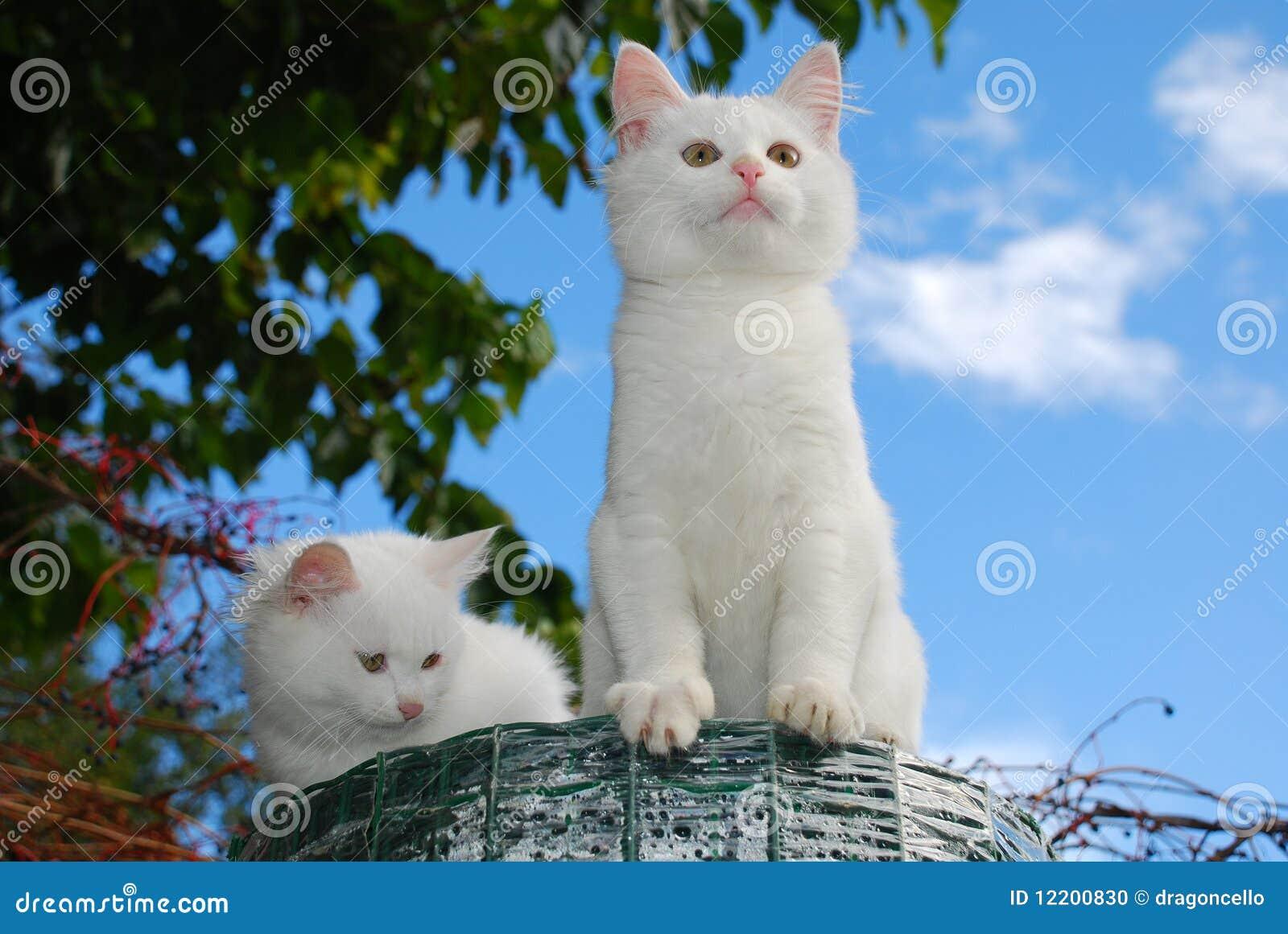 Zwei Kätzchen, die auf Rolle des Garten-Fechtens sitzen
