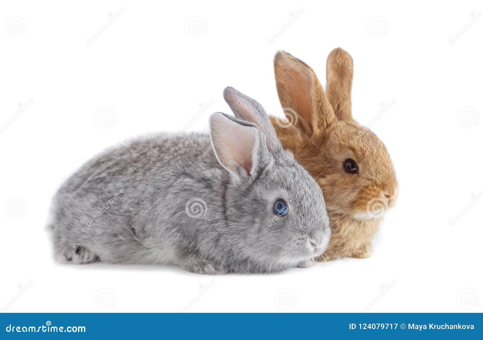 Zwei Kaninchen lokalisiert auf weißem Hintergrund