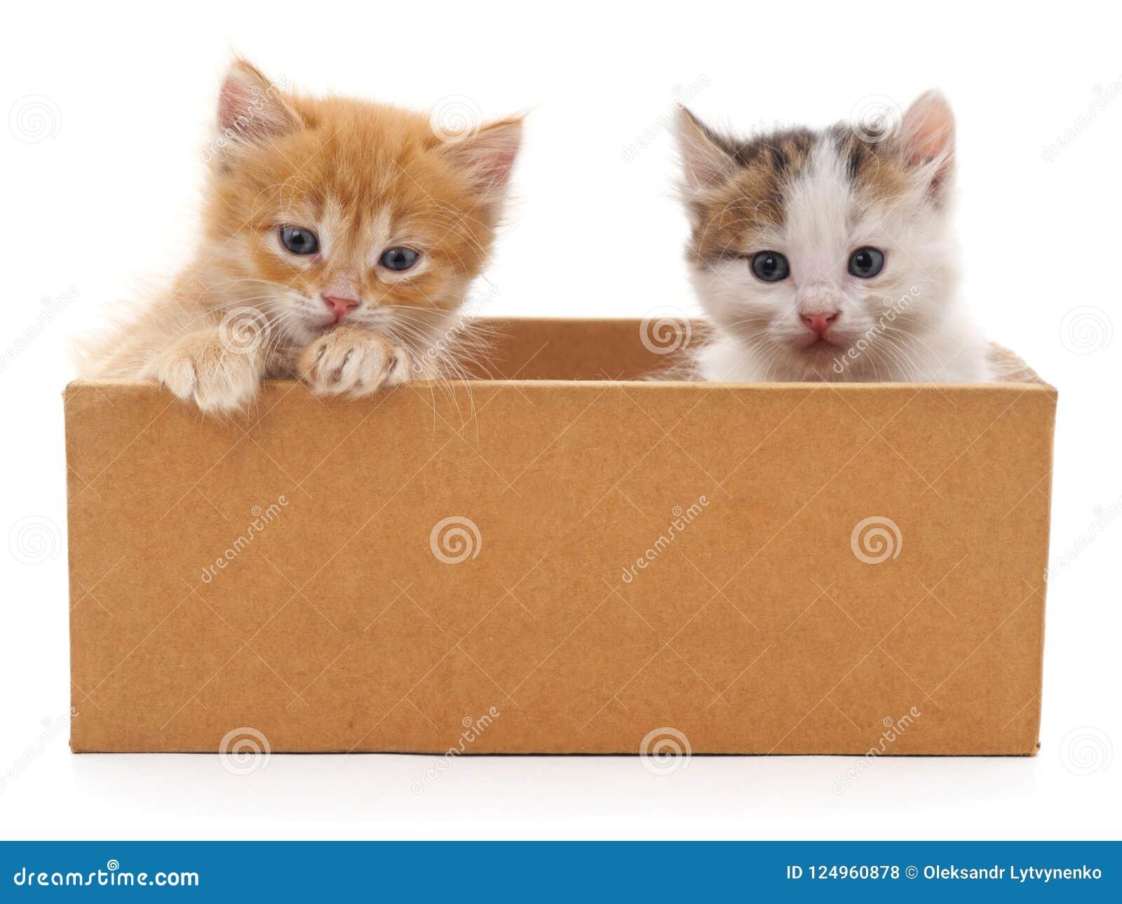 Zwei Katzen in einem Kasten