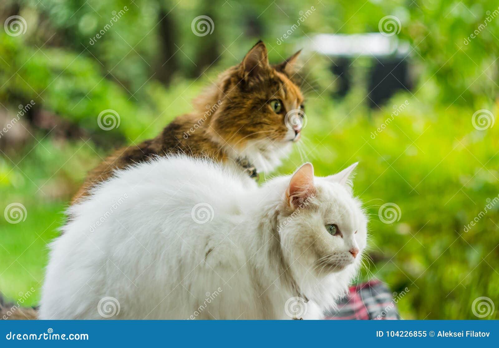Zwei Katzen Weiß und Farbe