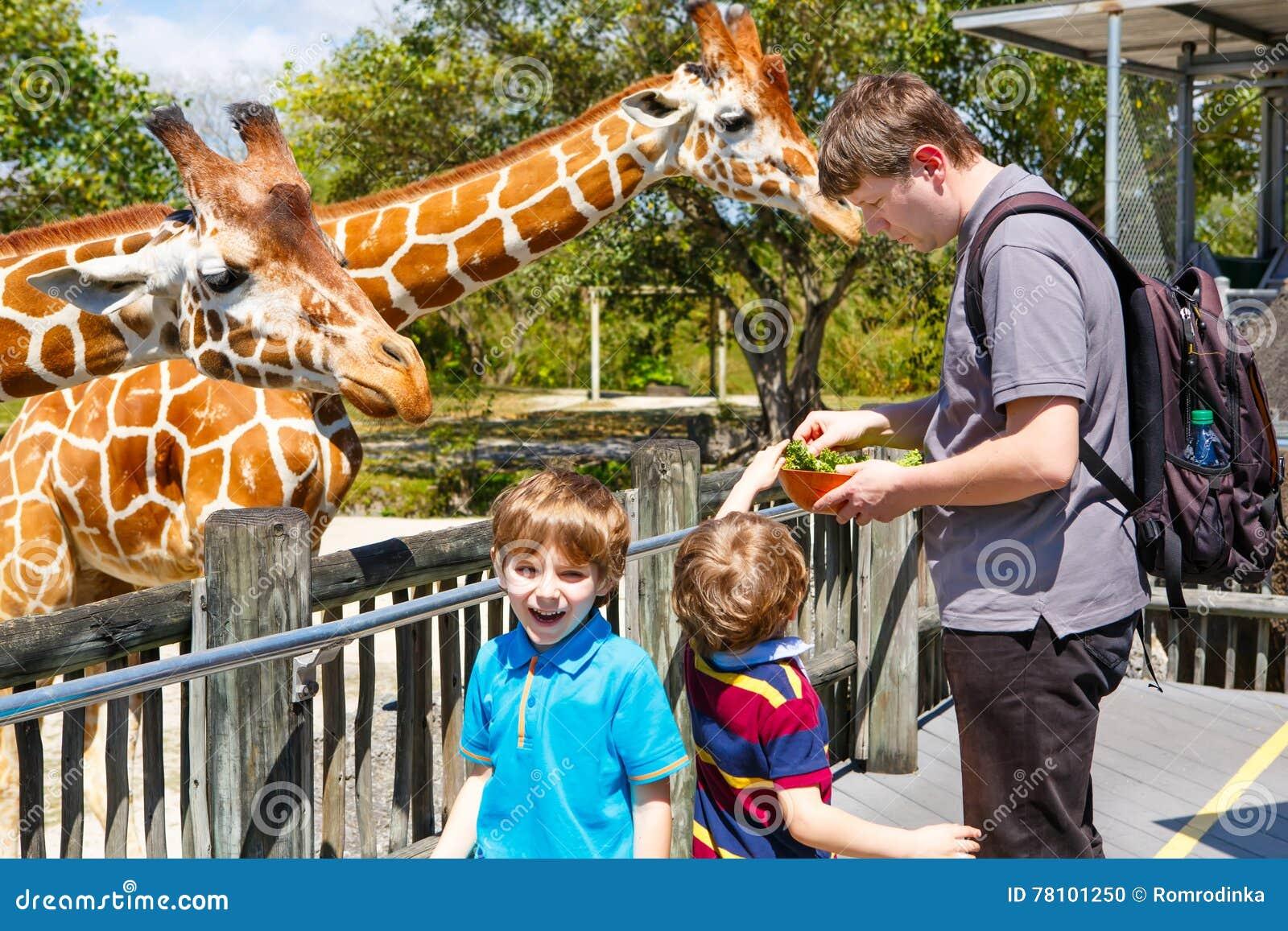 Zwei Kleinkindjungen und aufpassende und Fütterungsgiraffe des Vaters herein