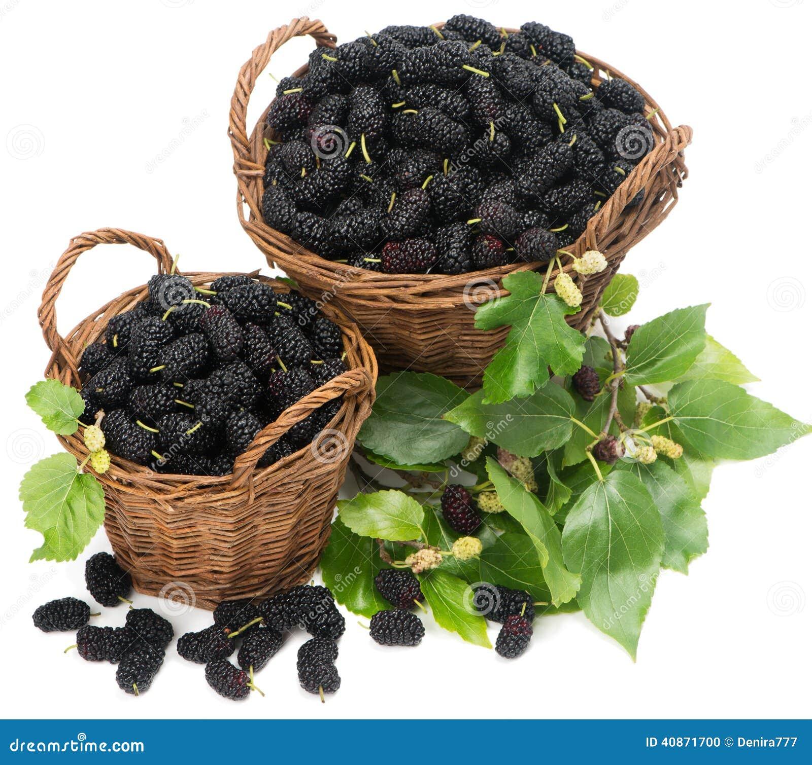 zwei k rbe mit schwarzen maulbeeren und bl ttern stockfoto bild 40871700. Black Bedroom Furniture Sets. Home Design Ideas