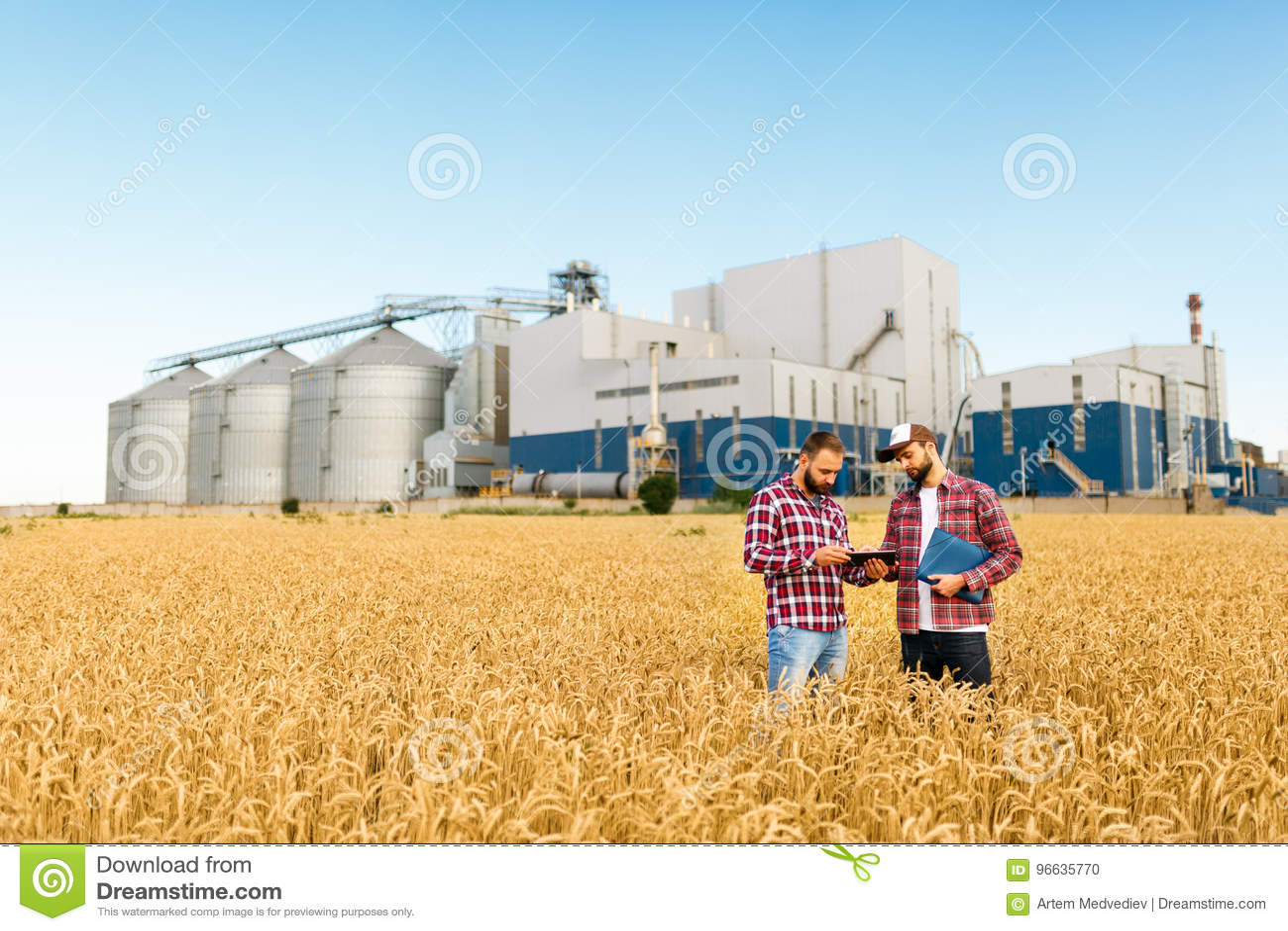 Zwei Landwirte stehen auf einem Weizengebiet mit Tablette Agronomen besprechen Ernte und Ernten unter Ohren des Weizens mit Korn