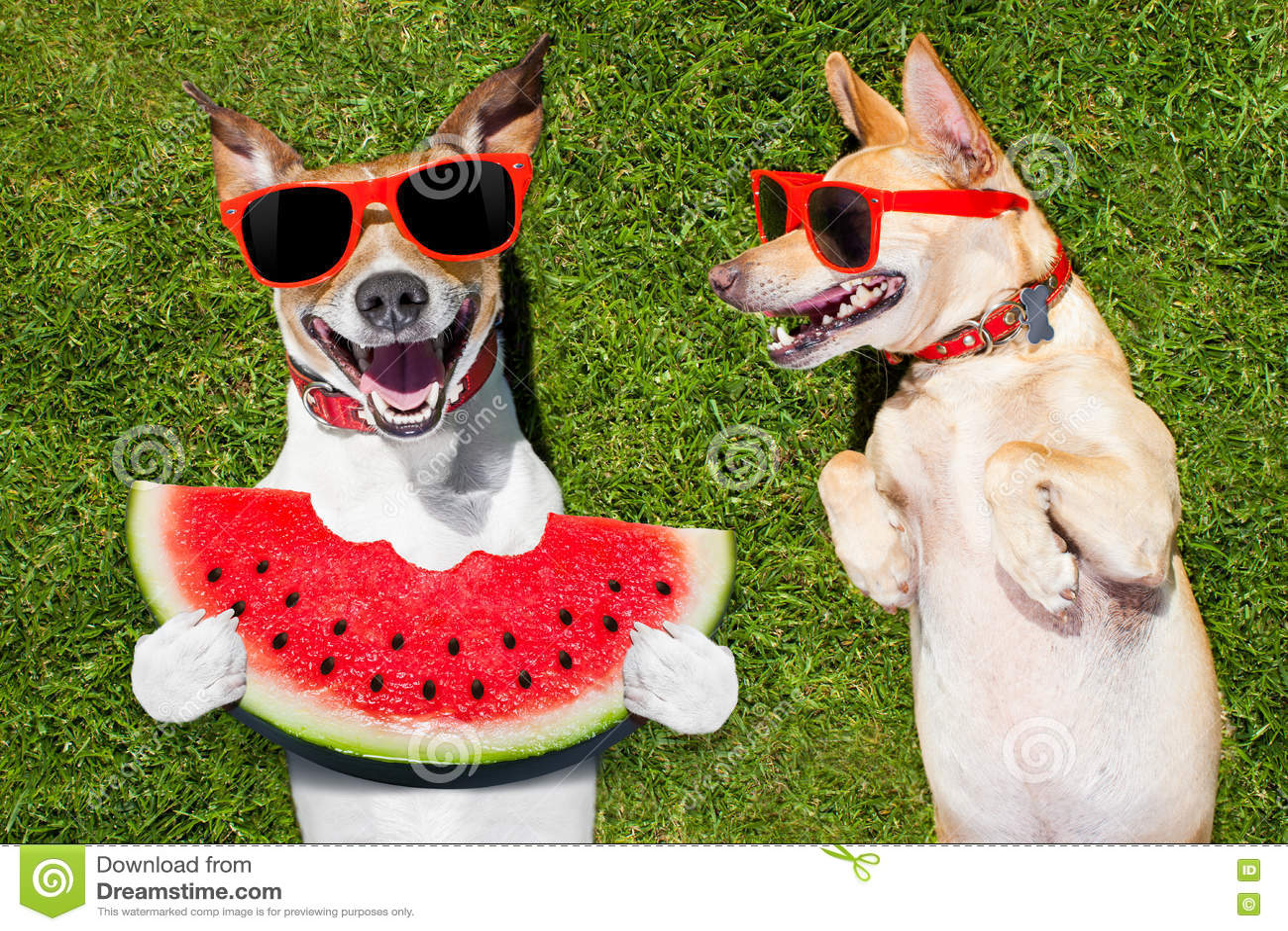 Zwei Lustige Hunde Stockbild Bild Von Lustig Freude 74150969