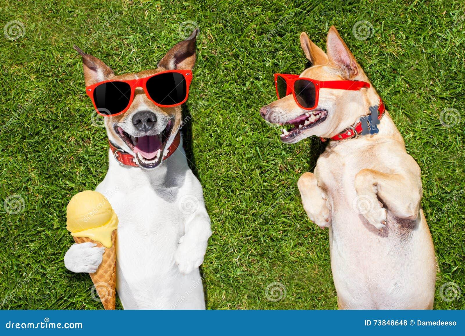 zwei lustige hunde mit eiscreme stockfoto bild von wiese park 73848648. Black Bedroom Furniture Sets. Home Design Ideas