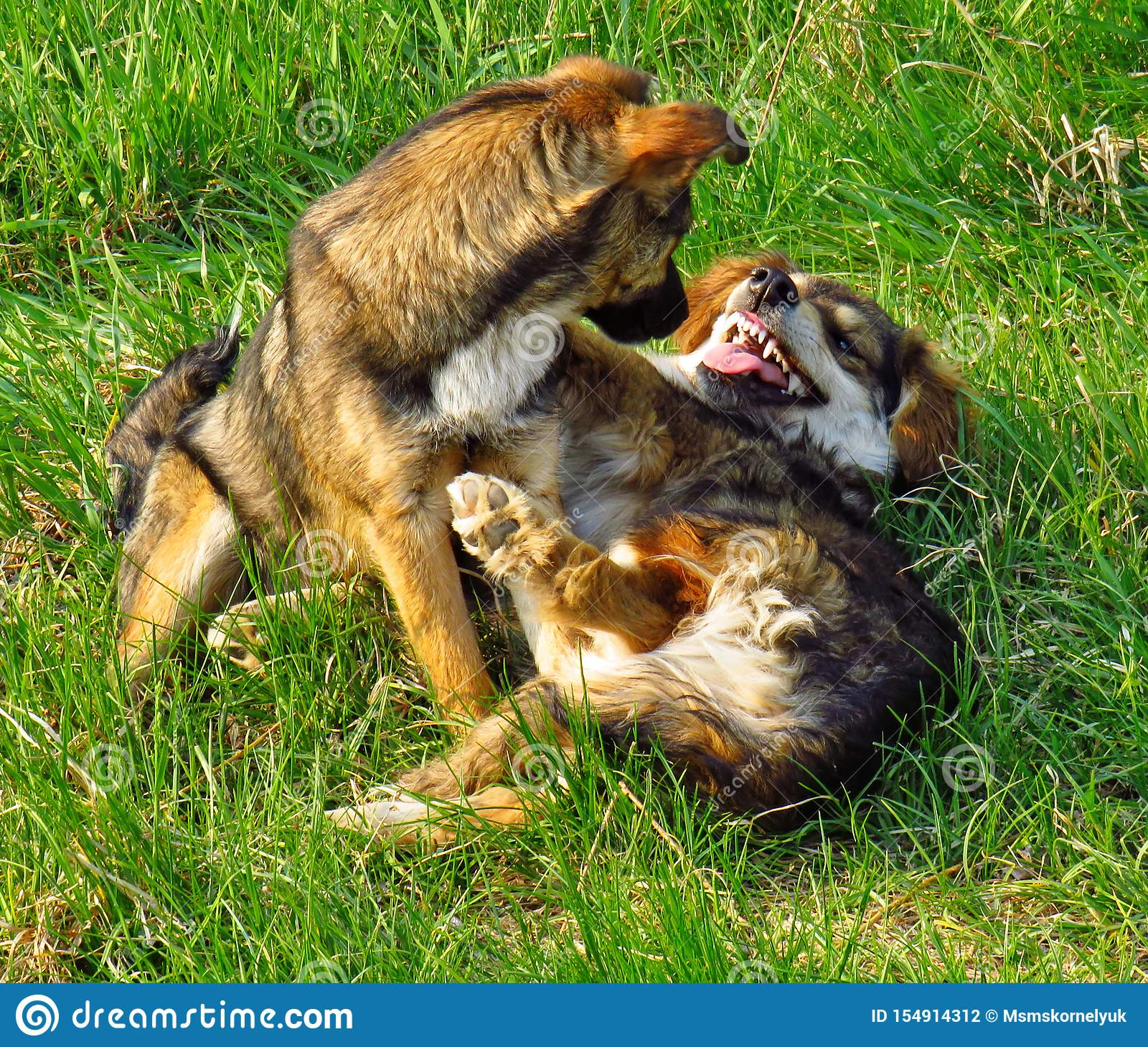 Lustige Videos Hunde