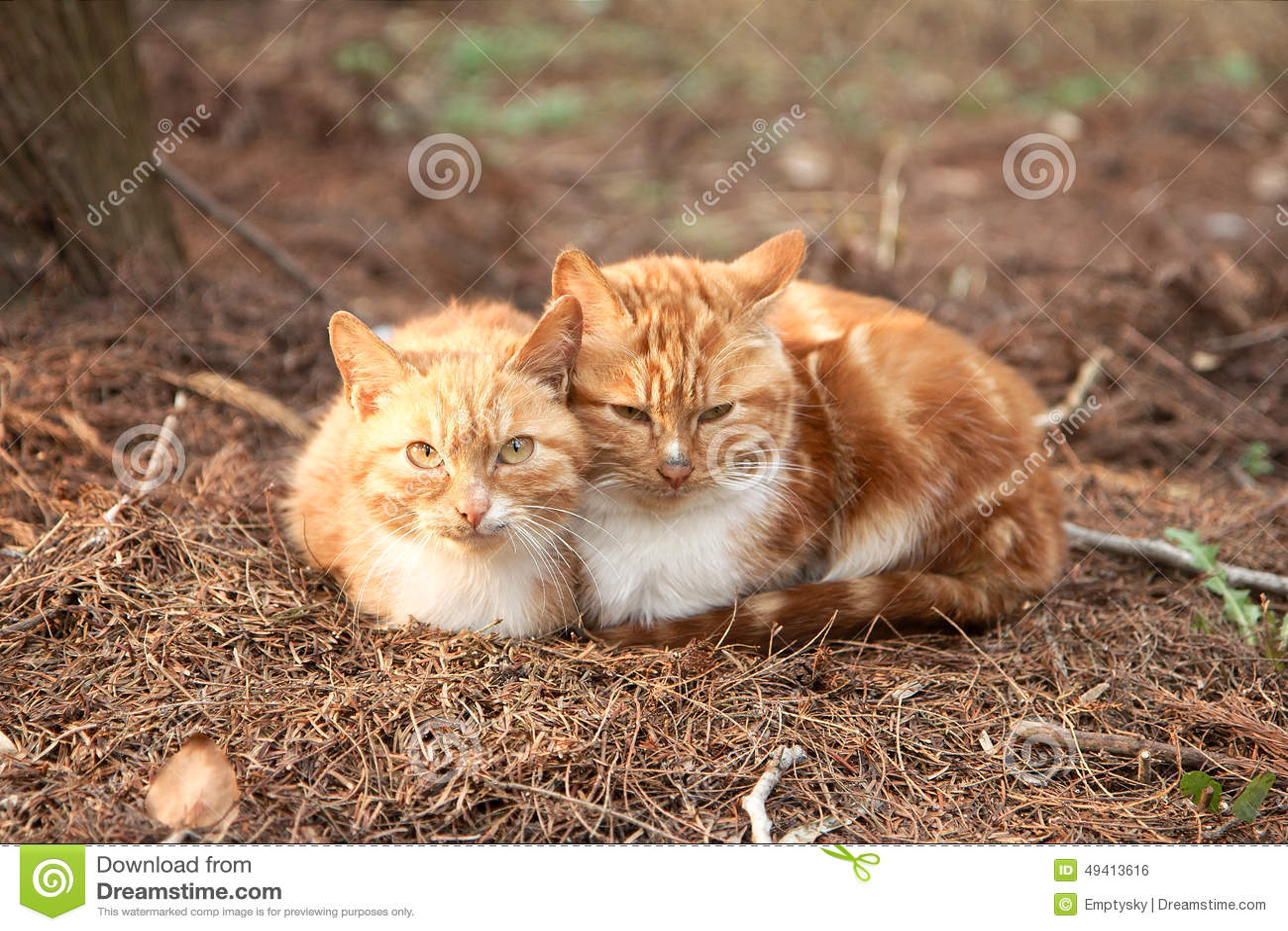 Download Zwei Nette Reizende Junge Katzen Stockfoto - Bild von lieben, pelz: 49413616