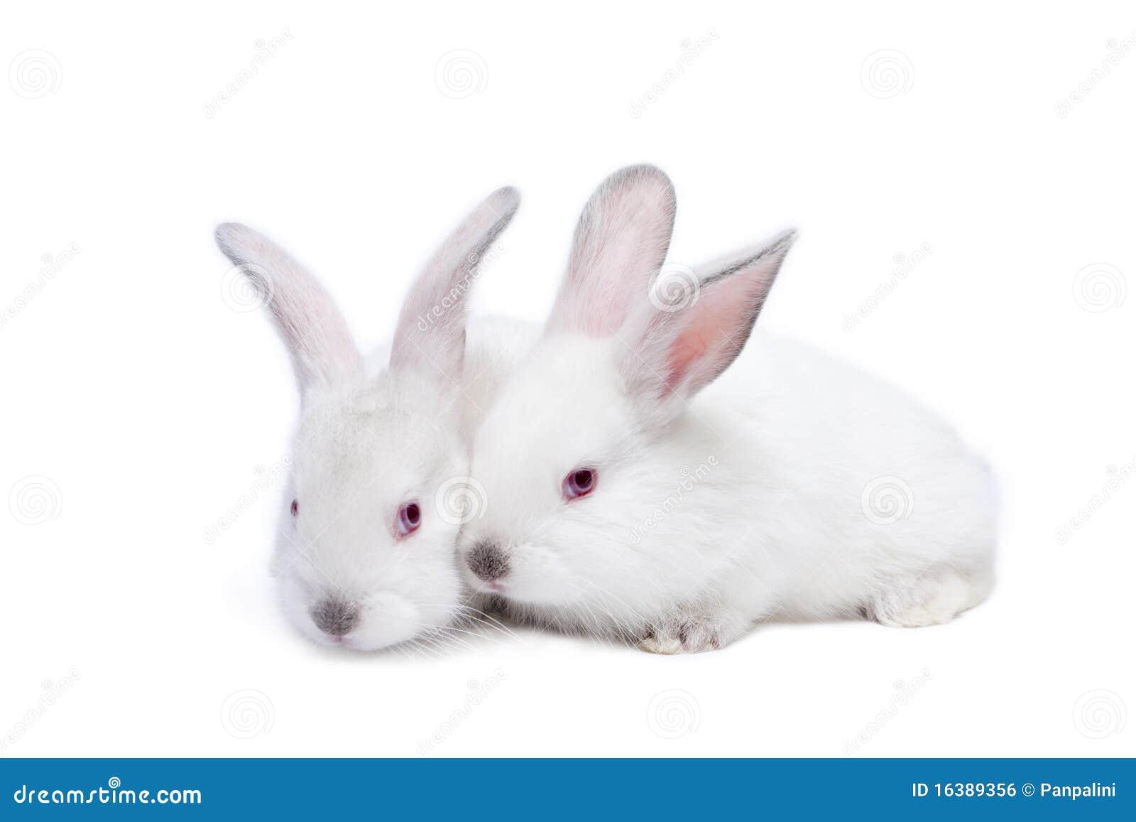 Zwei nette weiße getrennte Schätzchenkaninchen