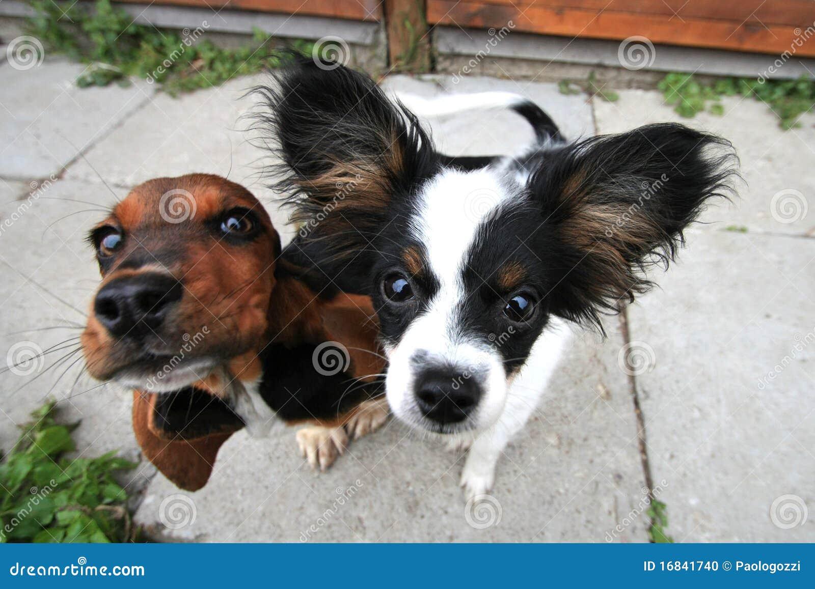 Zwei neugierige Hunde
