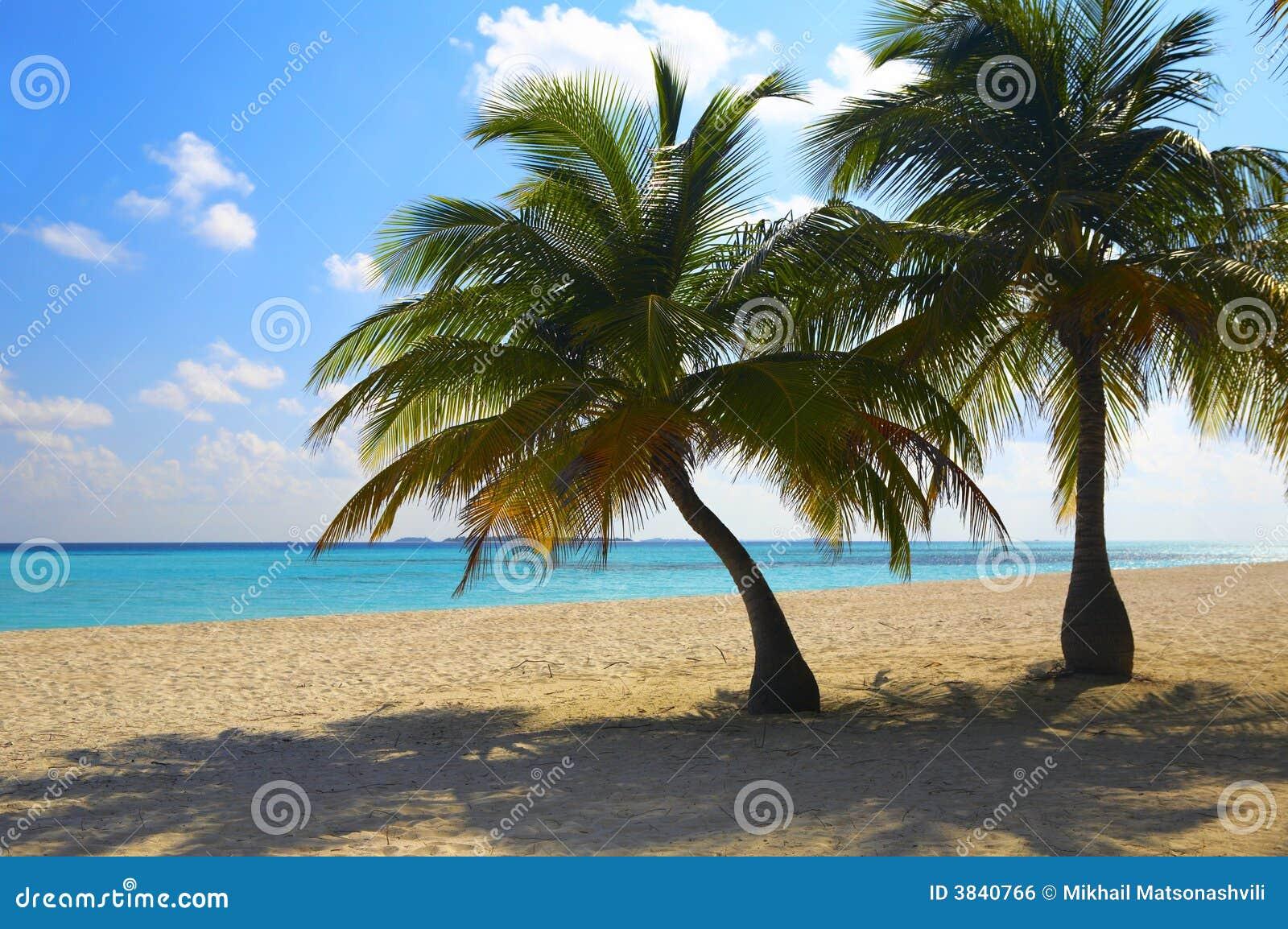 zwei palmen sind auf einem tropischen strand lizenzfreies stockbild bild 3840766. Black Bedroom Furniture Sets. Home Design Ideas