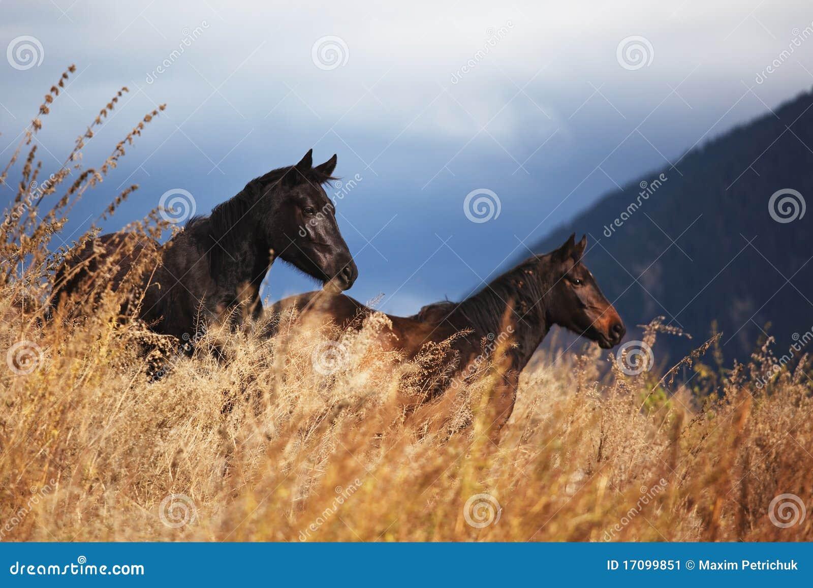 Zwei Pferde im Berg