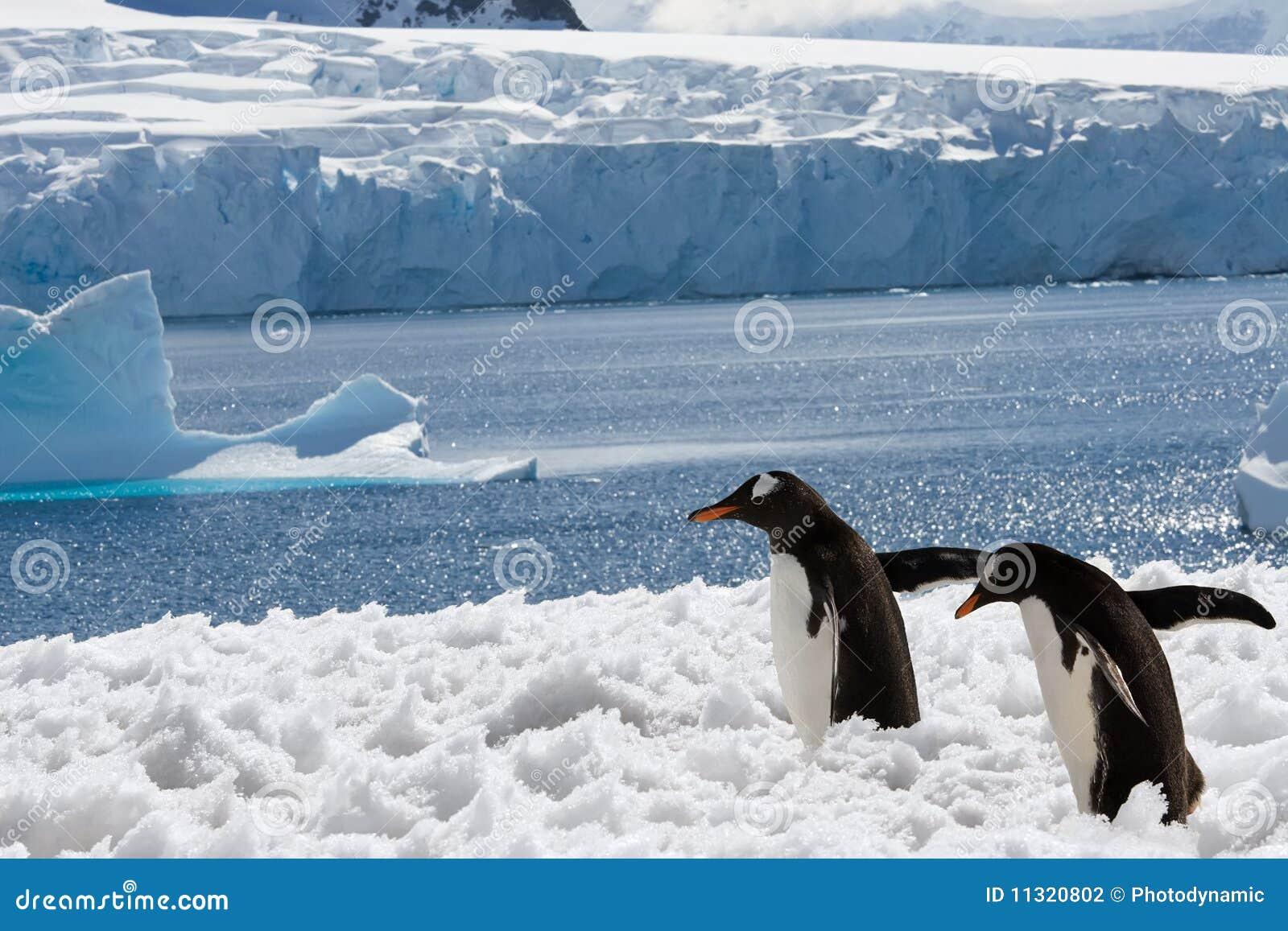 Zwei Pinguine im Schnee