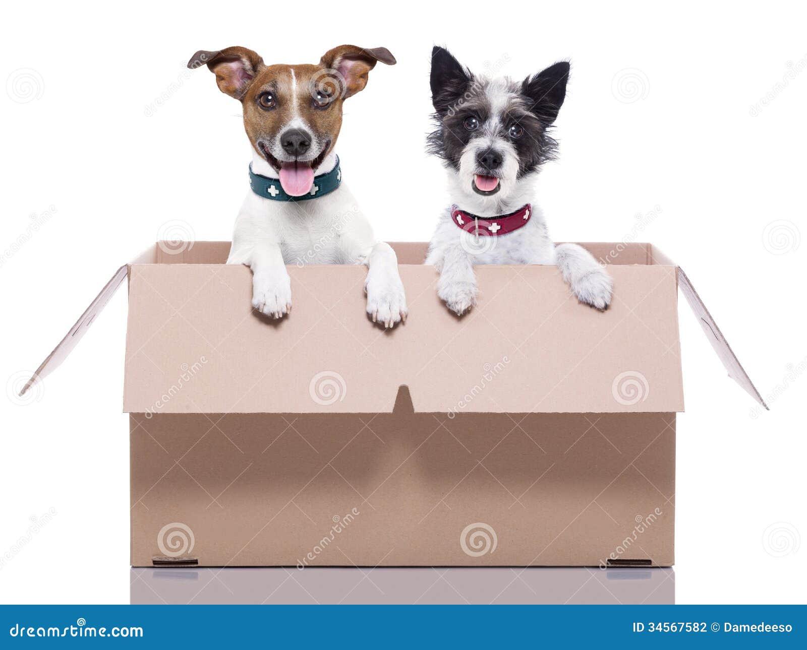 Zwei Posthunde