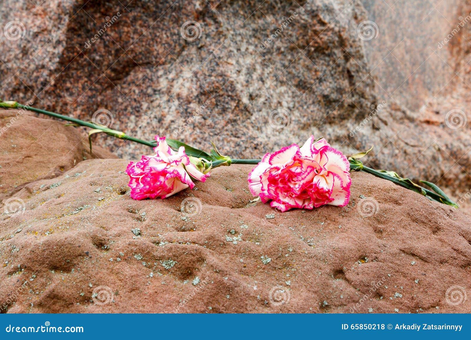 Zwei rosa Gartennelken auf einem Stein