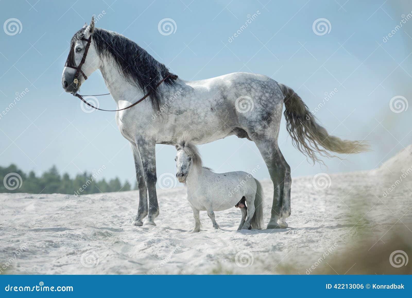 zwei sch ne pferde die auf der w ste stillstehen stockfoto bild von s ugetier zucht 42213006. Black Bedroom Furniture Sets. Home Design Ideas
