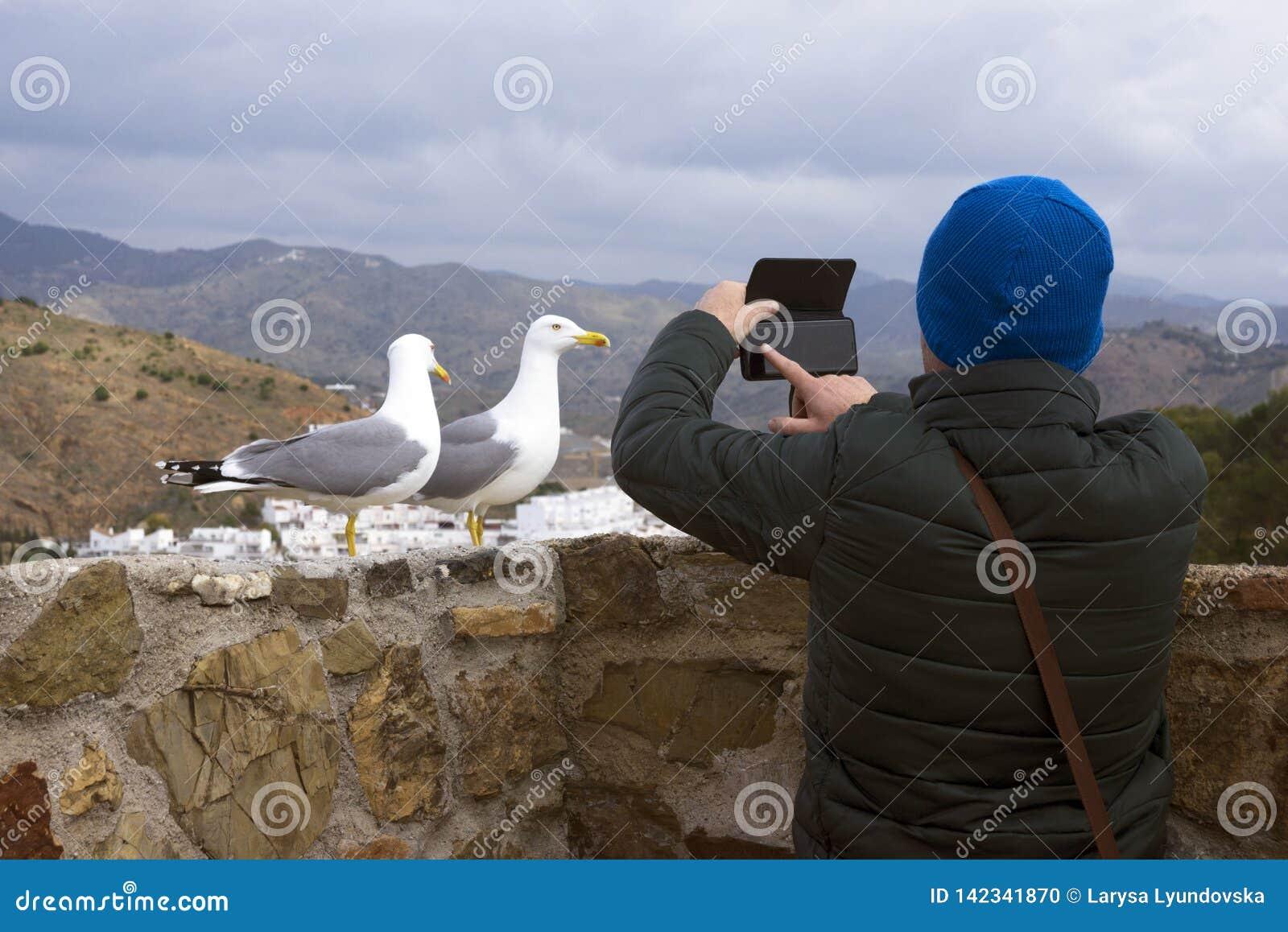 Zwei Schwarzkopfmöwen Larus michahellis stehen auf der Steinwand der alten Festung Ein Mann fotografiert Vögel auf einem Smartpho