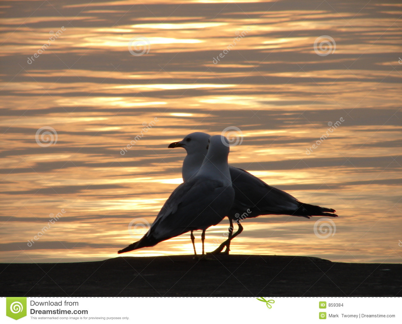 Zwei Seemöwen am Sonnenaufgang