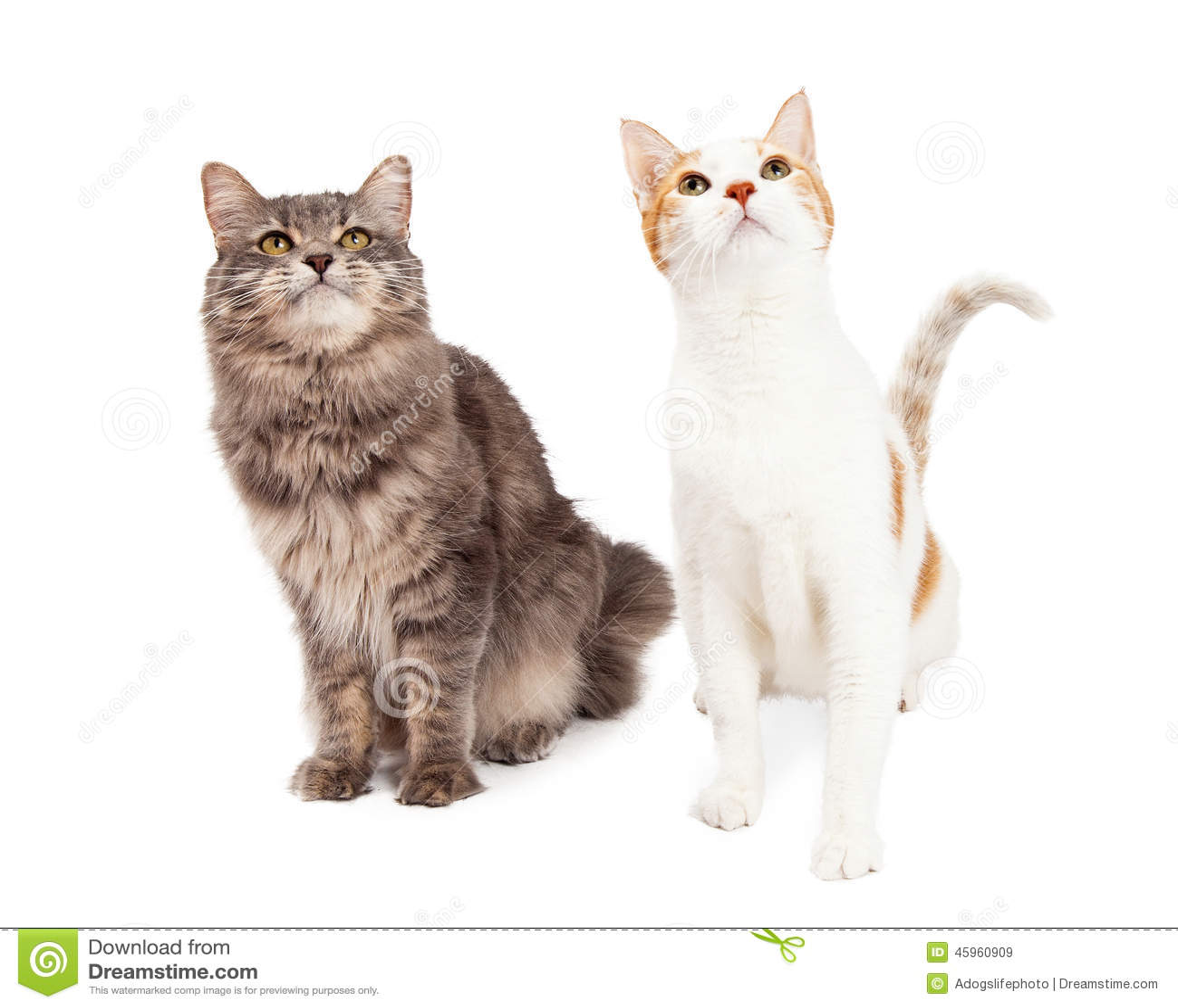 Zwei Tabby Cat Sitting und oben schauen zum Himmel