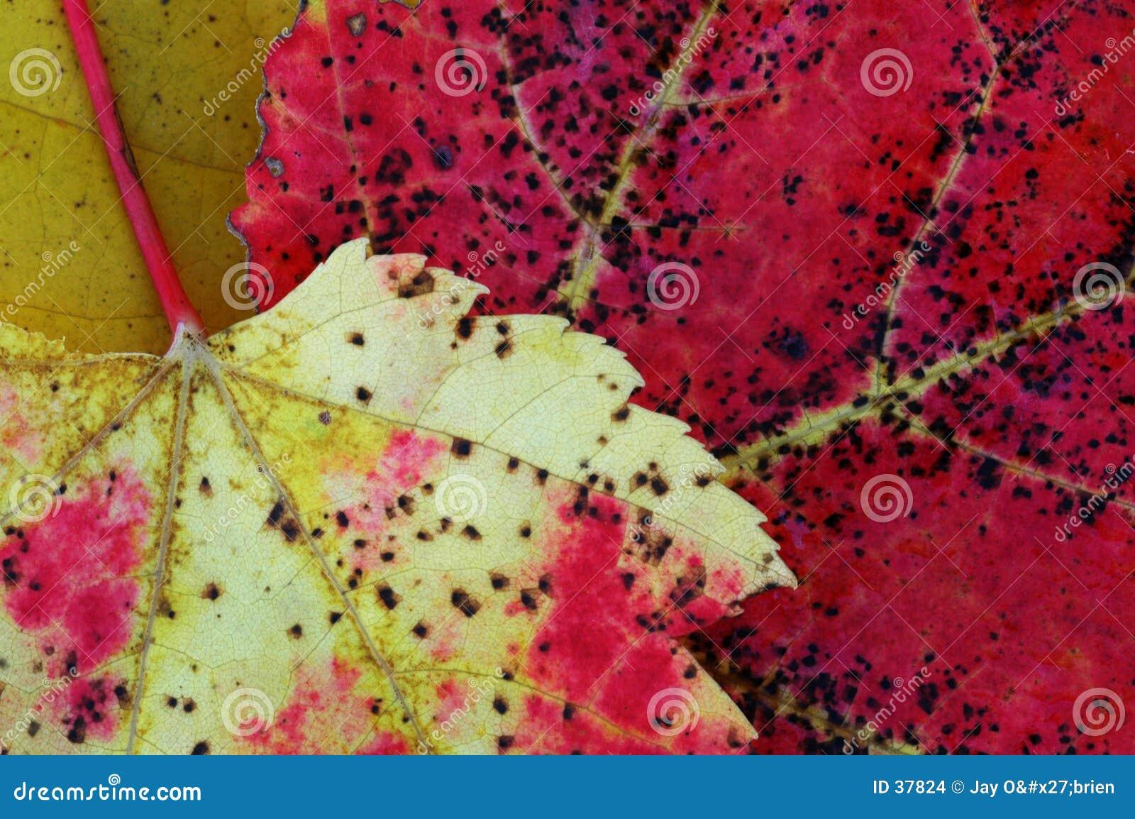 Zwei tote Blätter