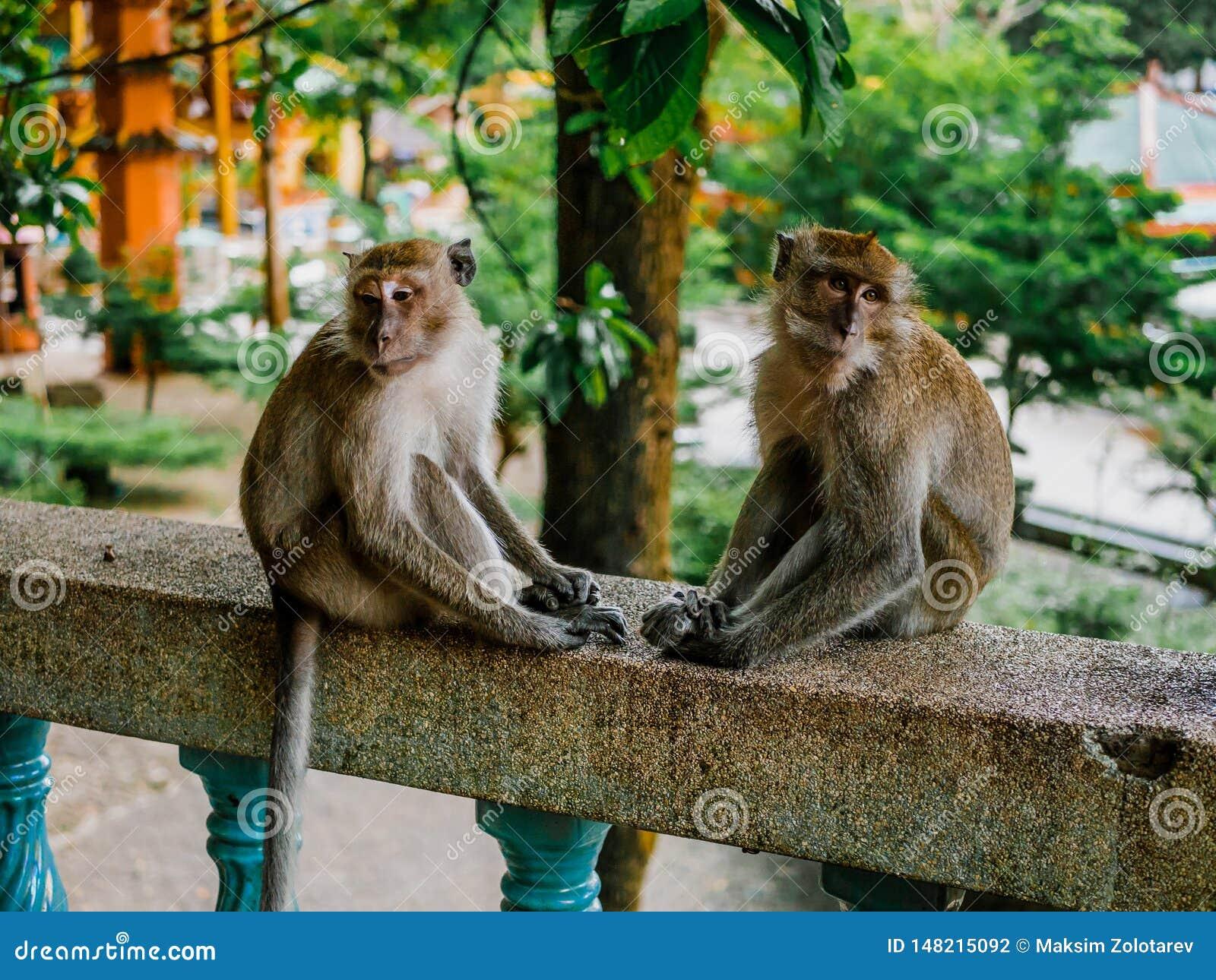 Zwei traurige Affen