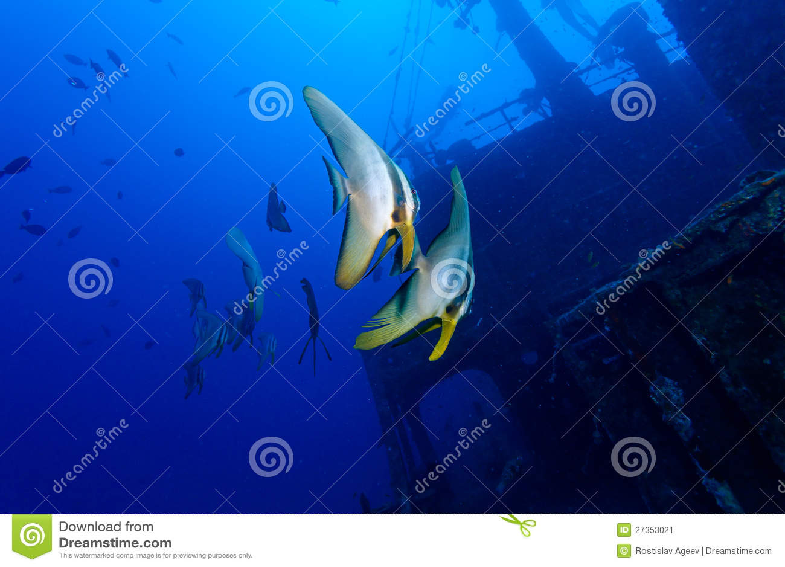 Zwei tropische Fische und Schiffswrack