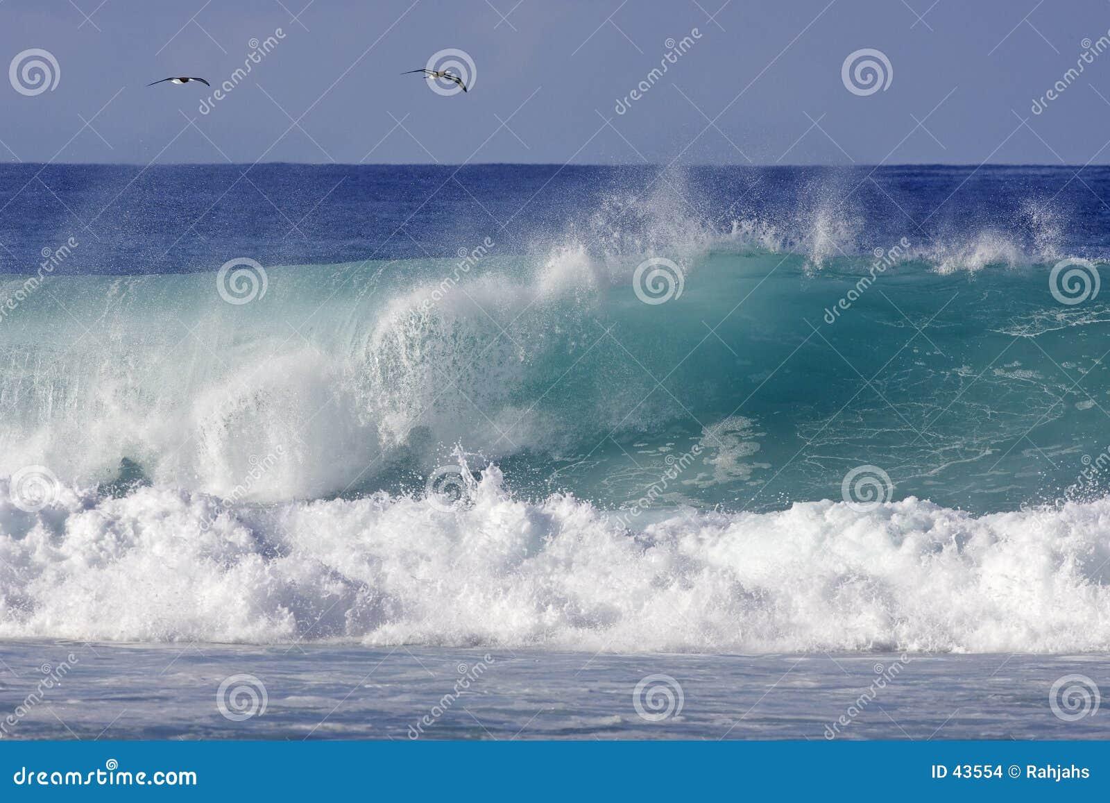 Download Zwei Vögel und eine Welle stockfoto. Bild von tropisch, küste - 43554