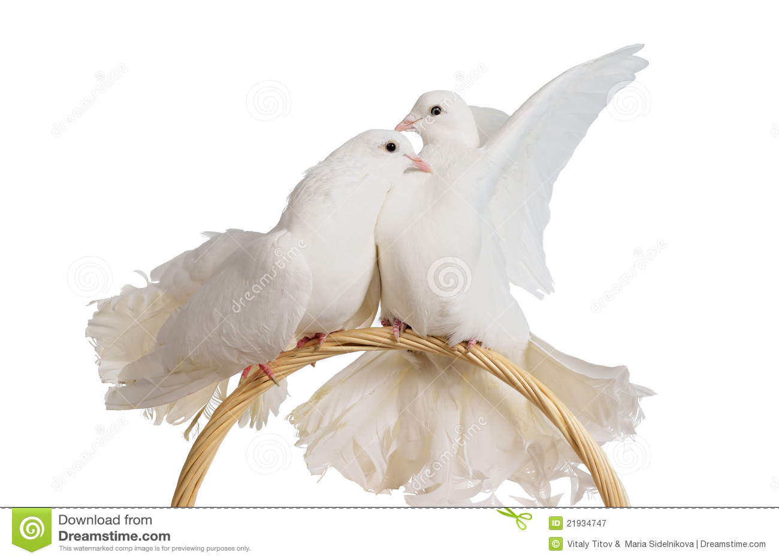 white doves kissing. Black Bedroom Furniture Sets. Home Design Ideas