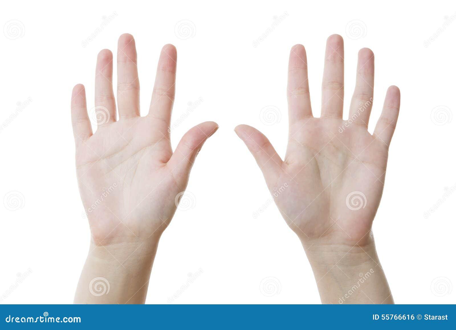 Zwei weibliche Hände, Palmen oben