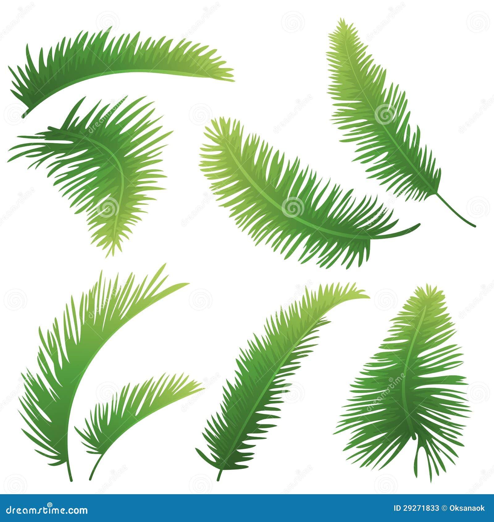 Zweige der Palmen