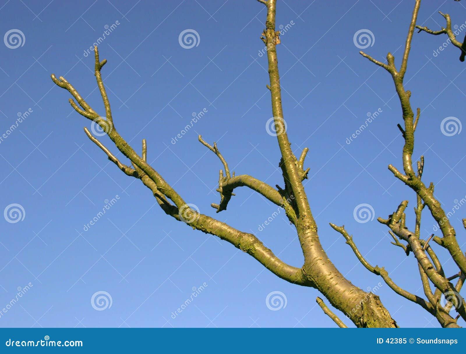 Zweige gegen blauen Himmel