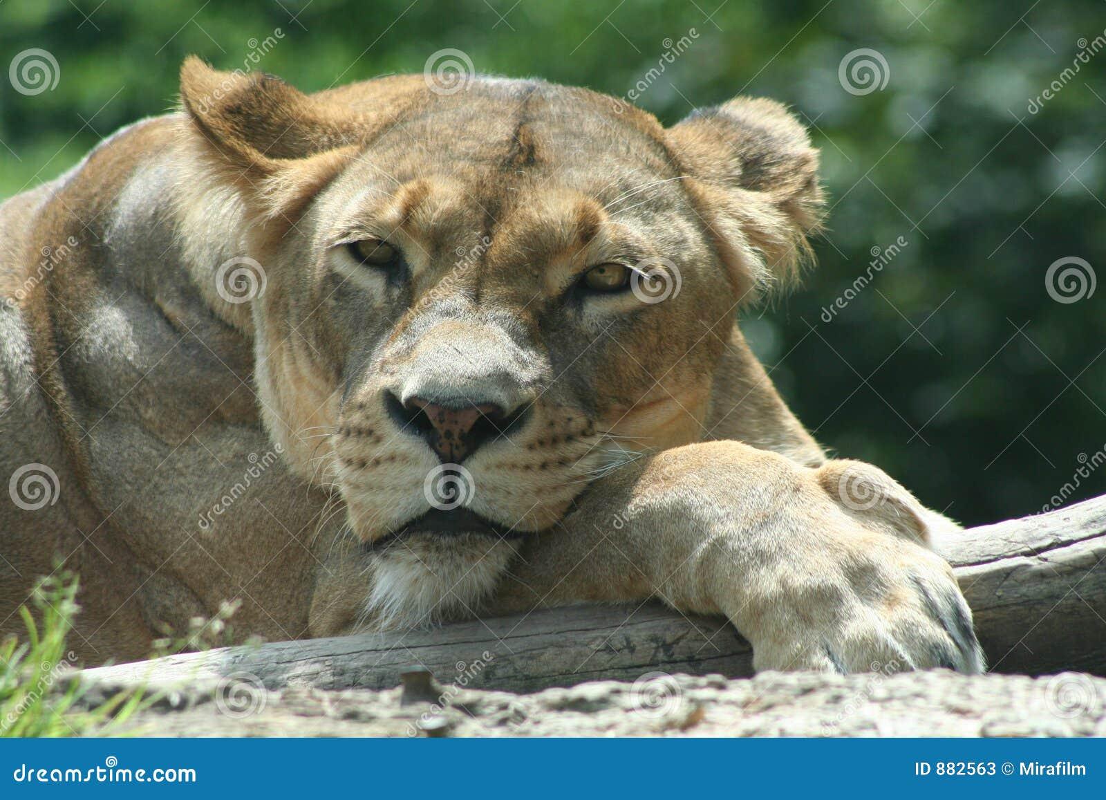 Zwierząt afrykańskich