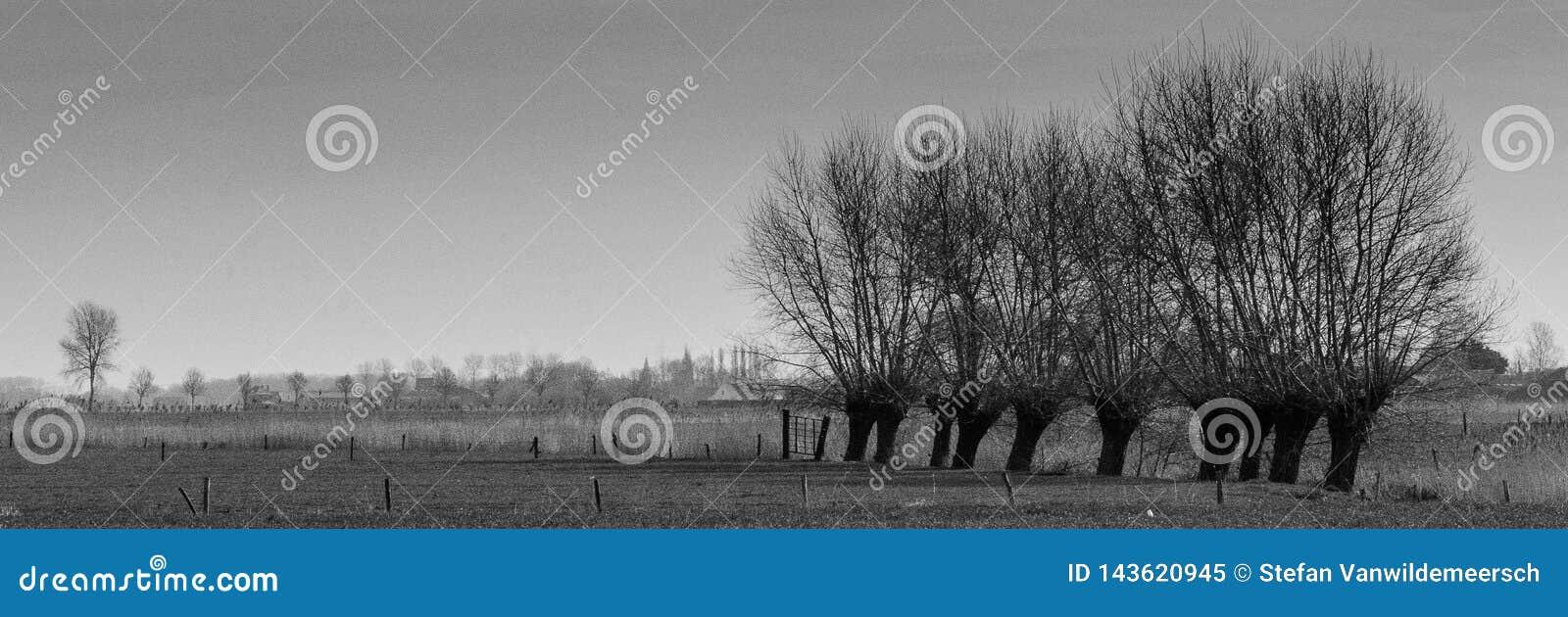 Zwierzę bezrogie wierzby w Flandryjskich polach