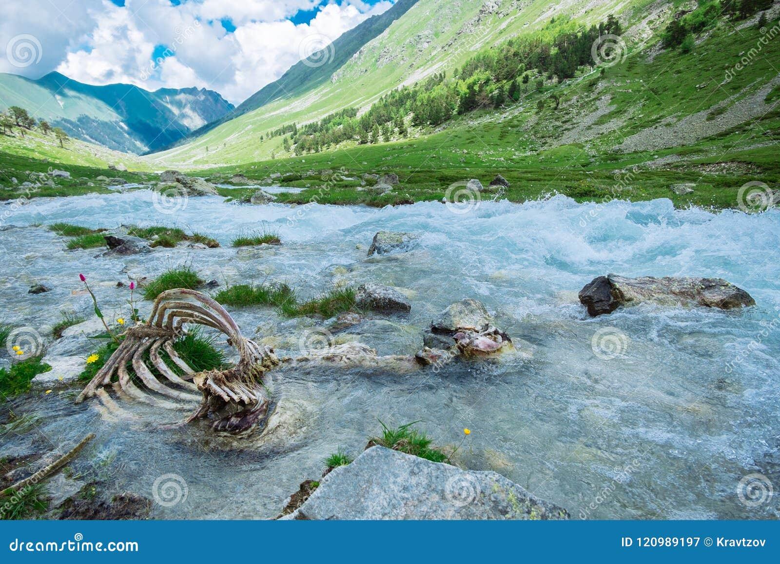 Zwierzęce kości w halnej rzece ekologia problem zanieczyszczenie środowisko naturalna selekcja w dzikiej naturze