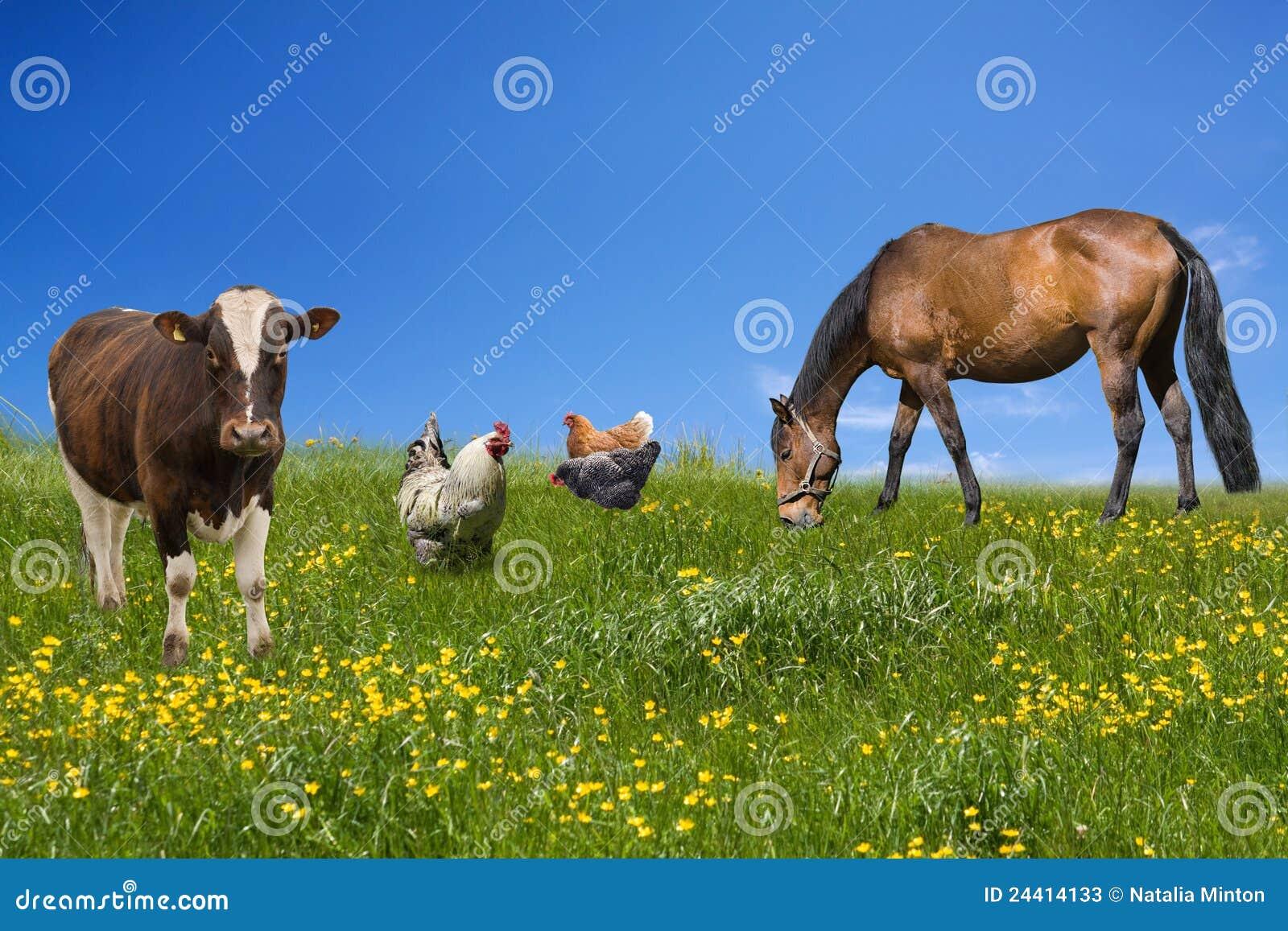 Zwierzęcia gospodarstwo rolne