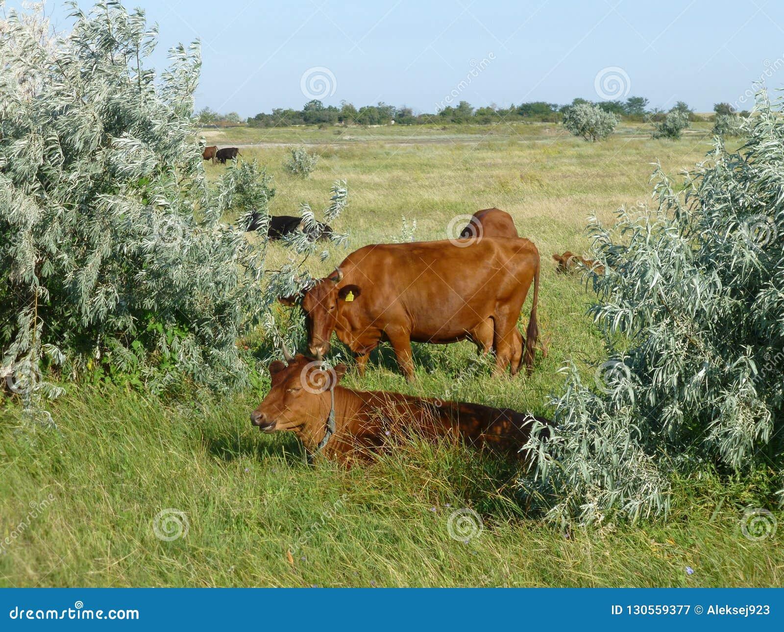 Zwierzęcy życie na gospodarstwie rolnym