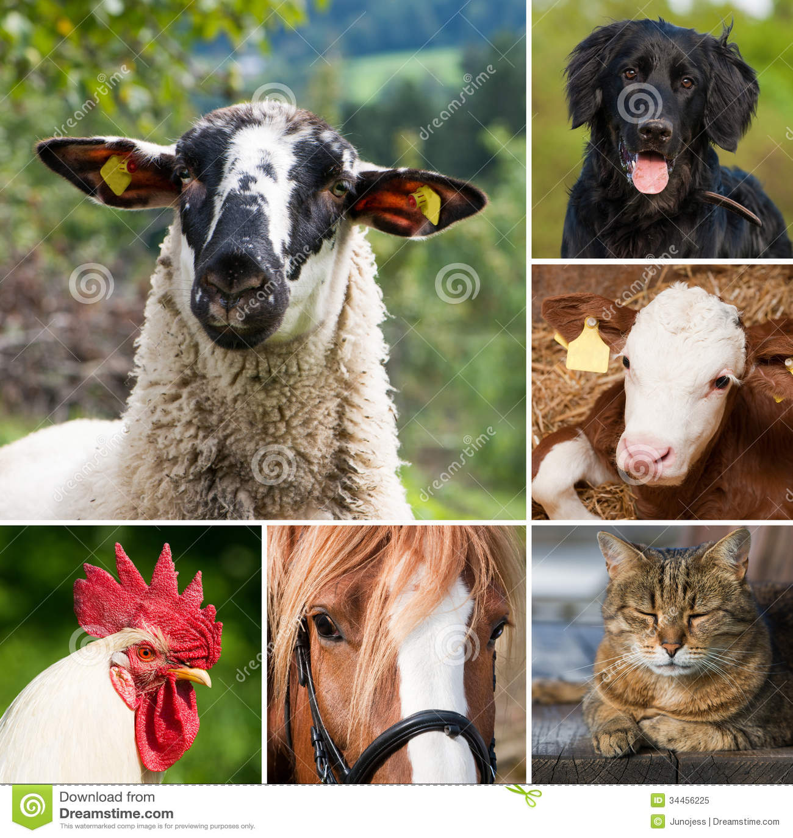 Zwierzęta gospodarskie - kolaż