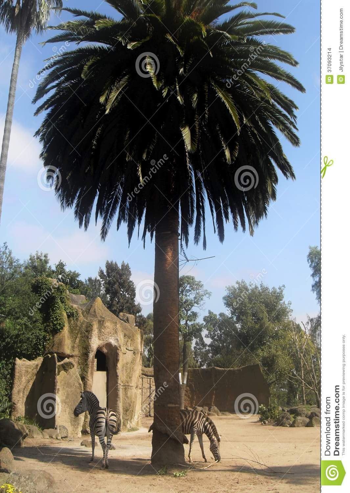 Download Zwierzęta przy palmą zdjęcie stock. Obraz złożonej z smarujący - 37093214