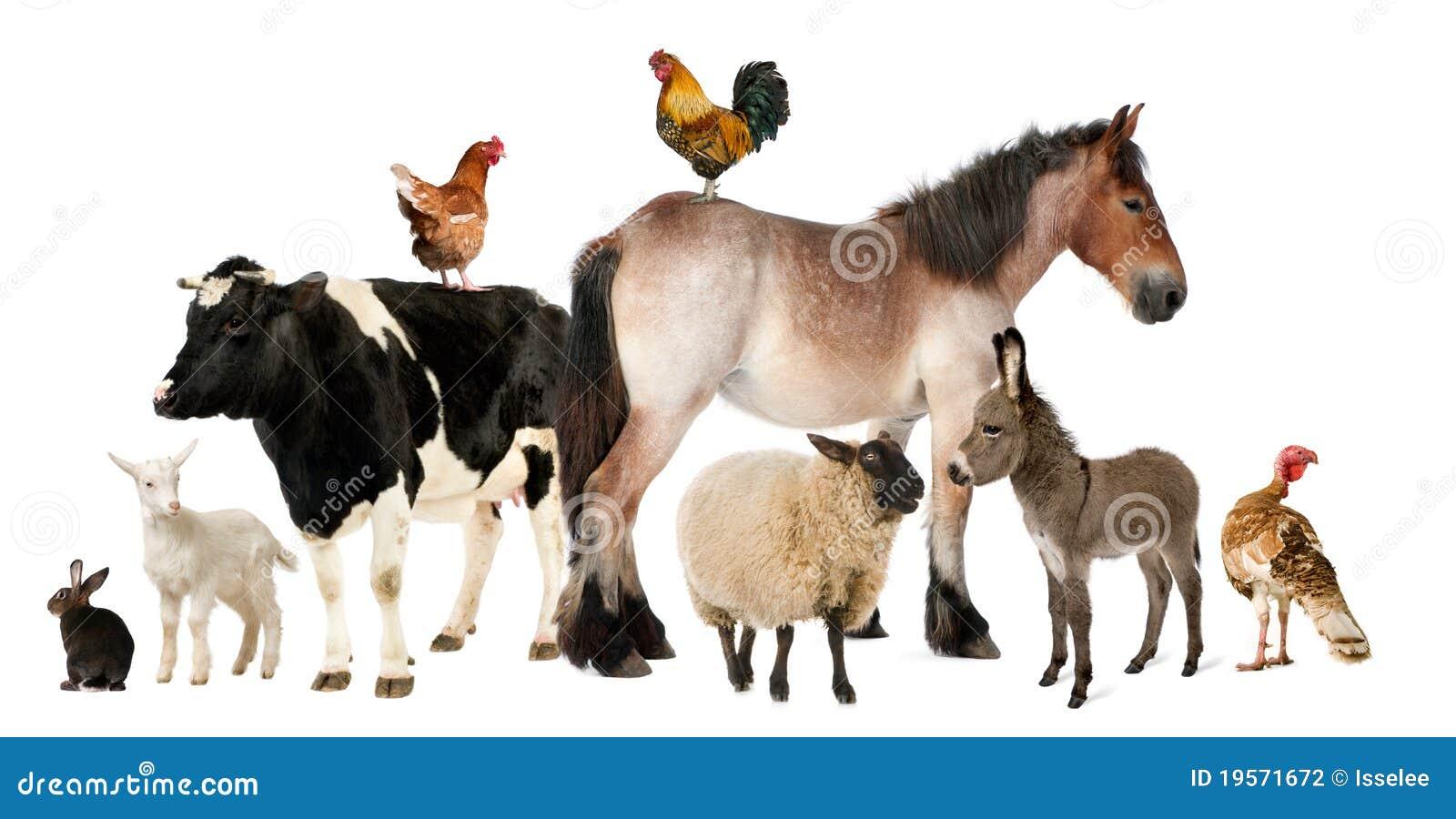 Zwierzęta uprawiają ziemię rozmaitość